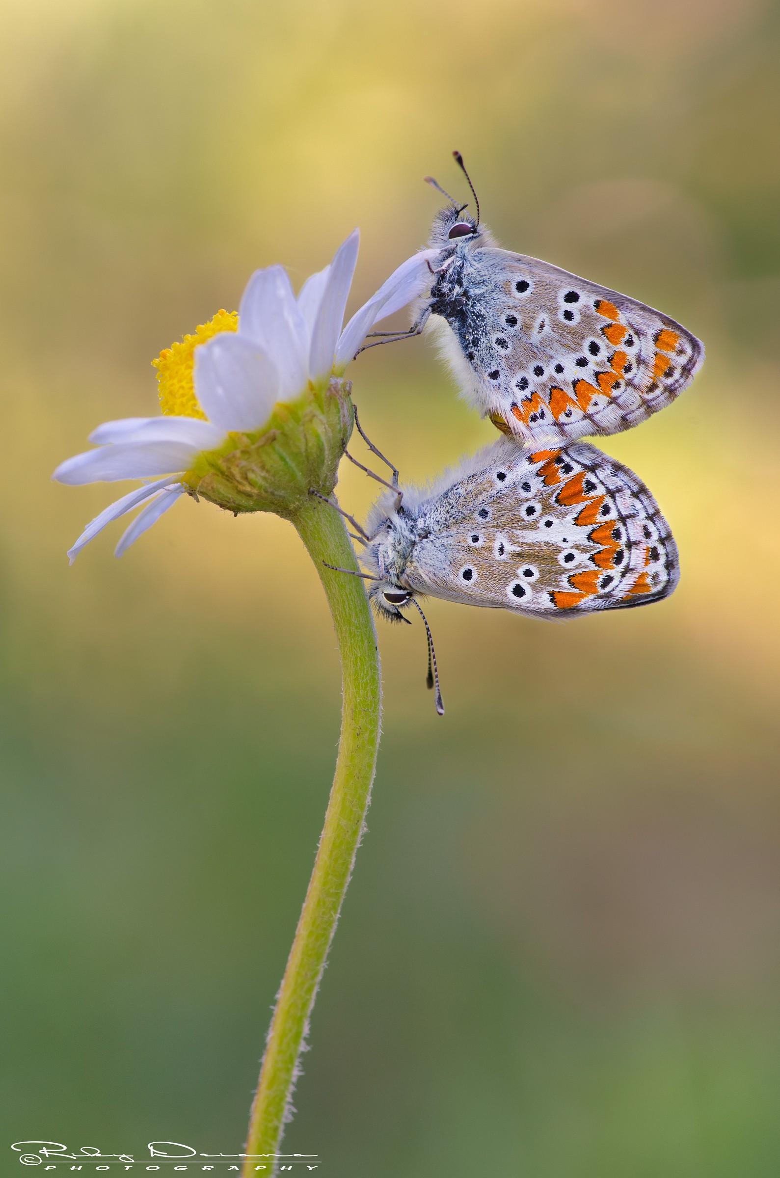 Le fleur de l'amour...
