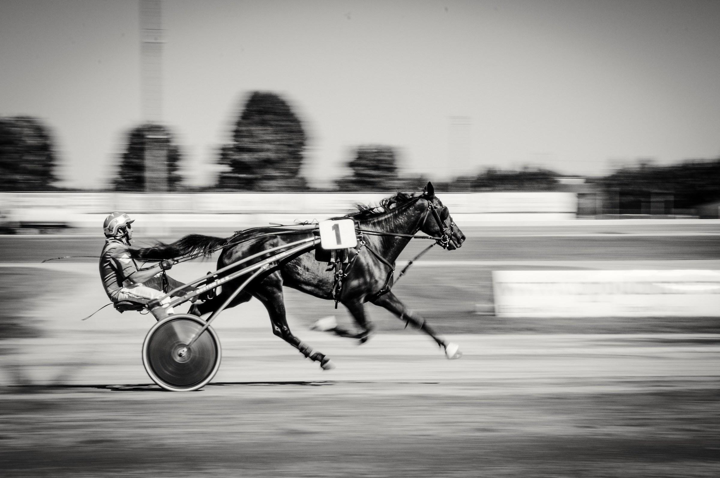 The black stallion...