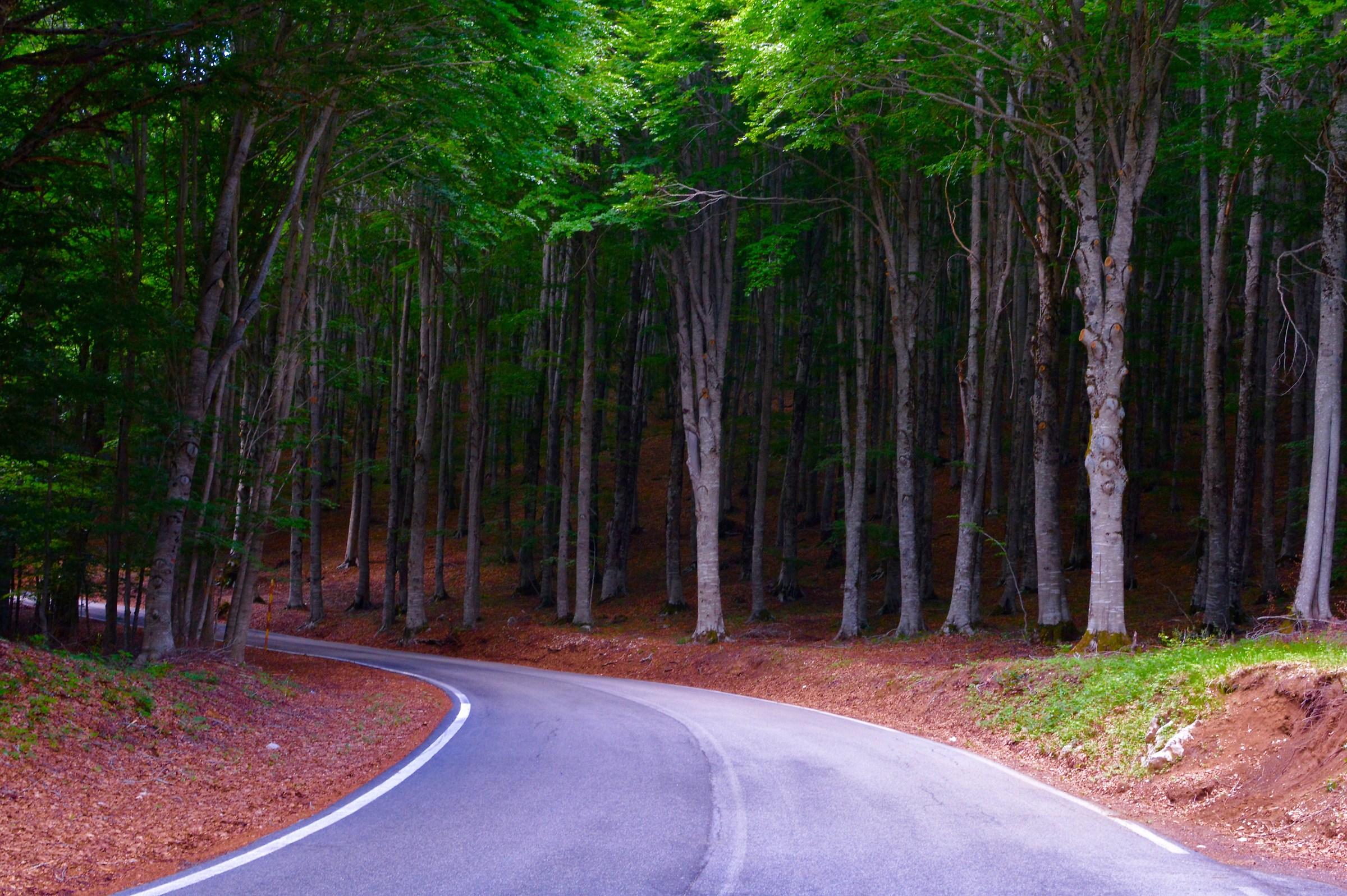 Monte Licata,bosco...