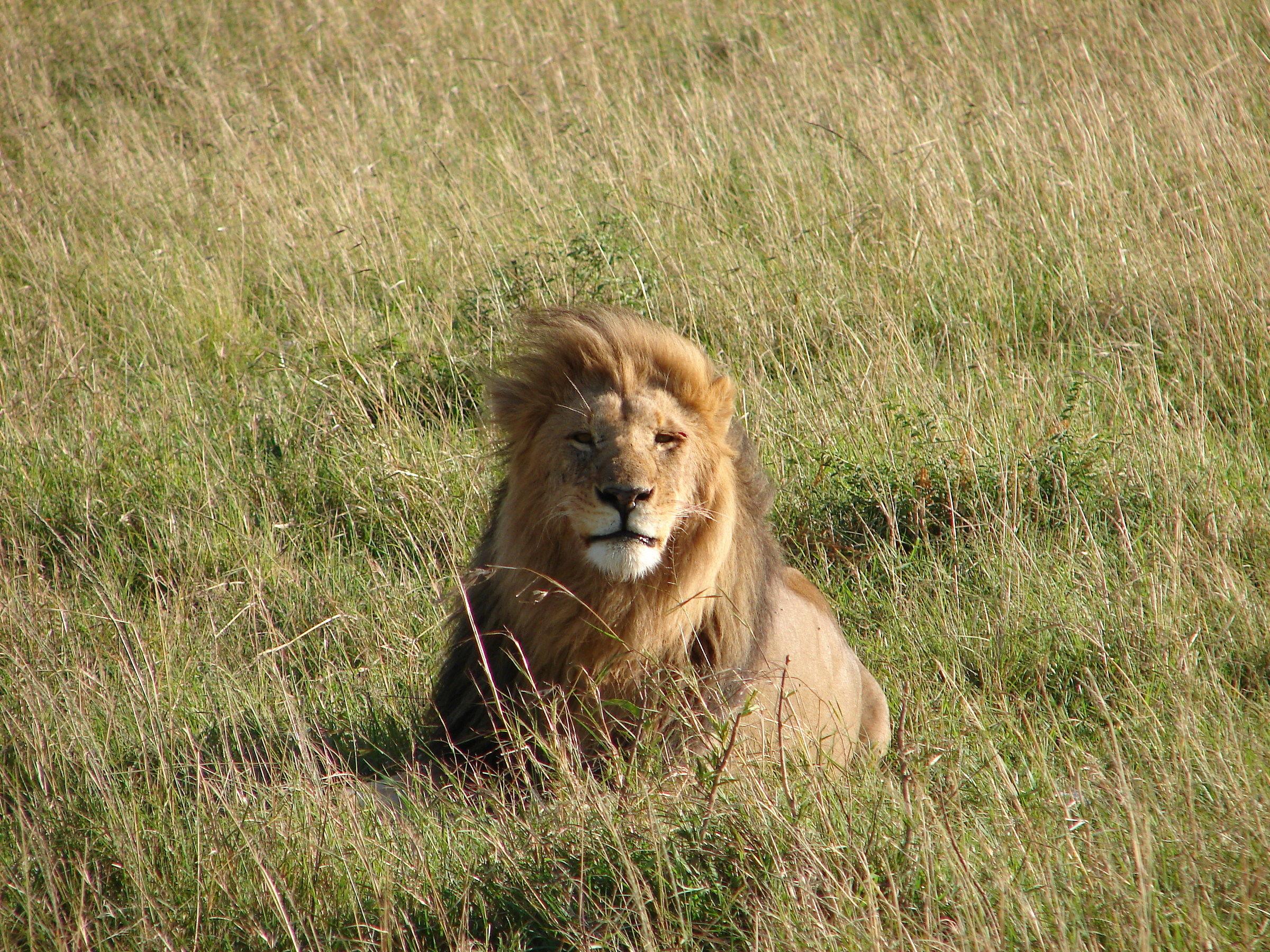 Leo masai...