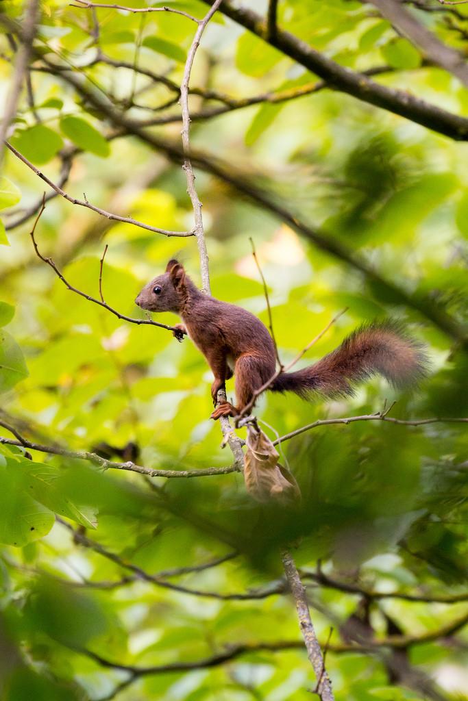 Squirrel posing...
