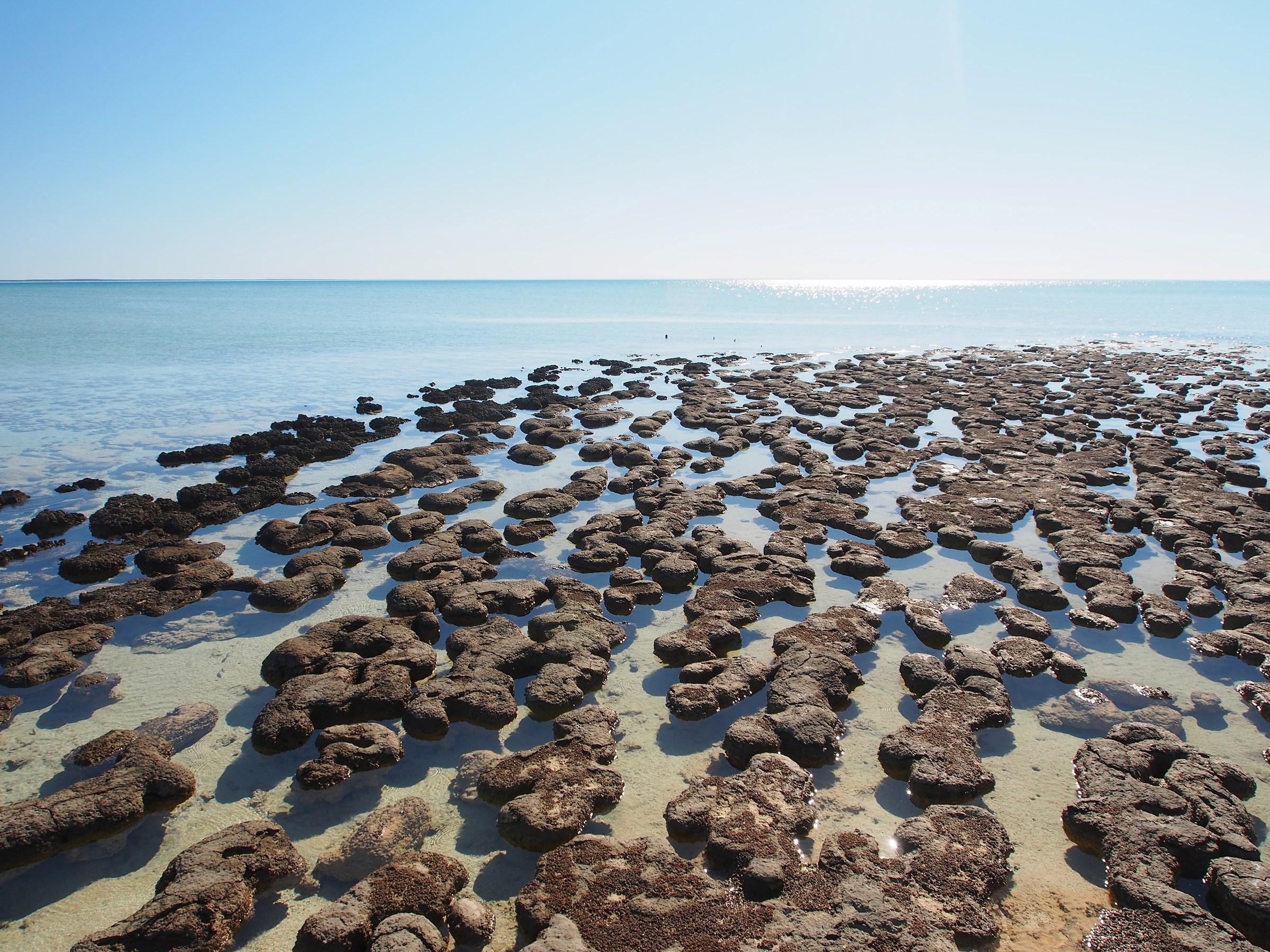 Stromatolites...