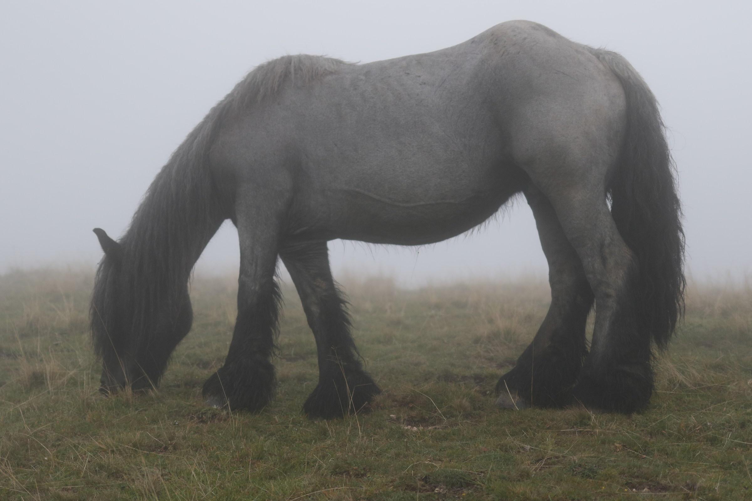 a horse suddenly...