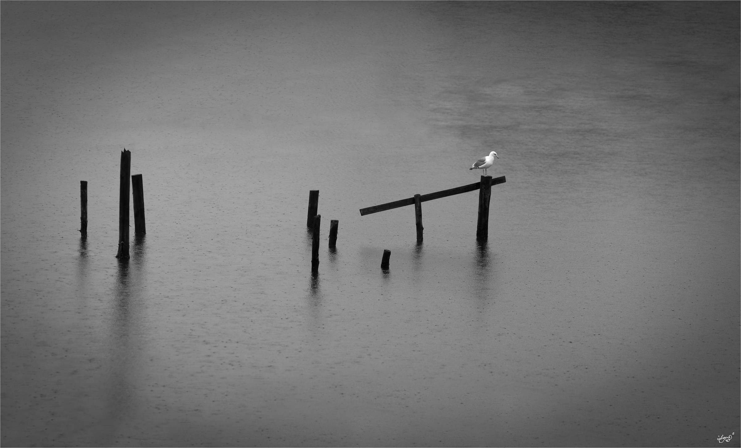 Seagull in the rain...