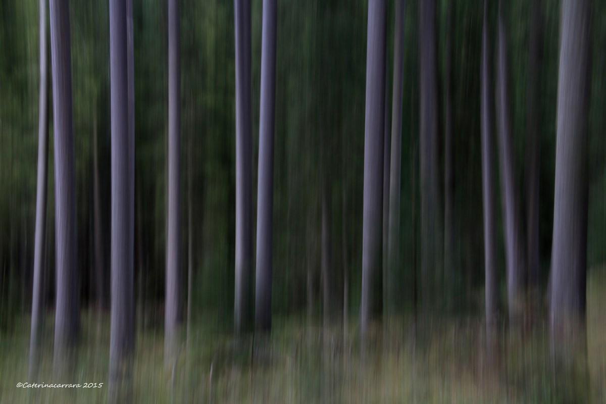 Un po' di mosso nel bosco....