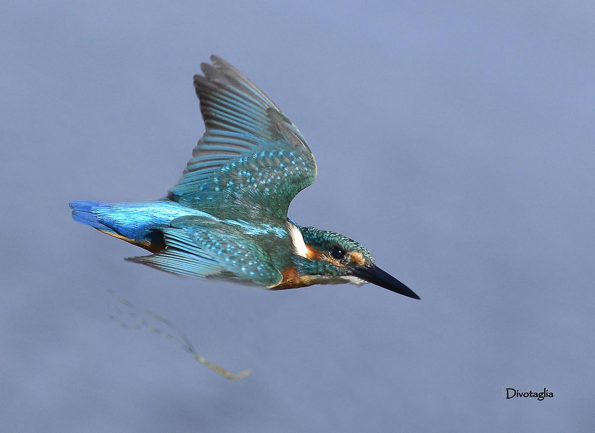 Blue Arrow...