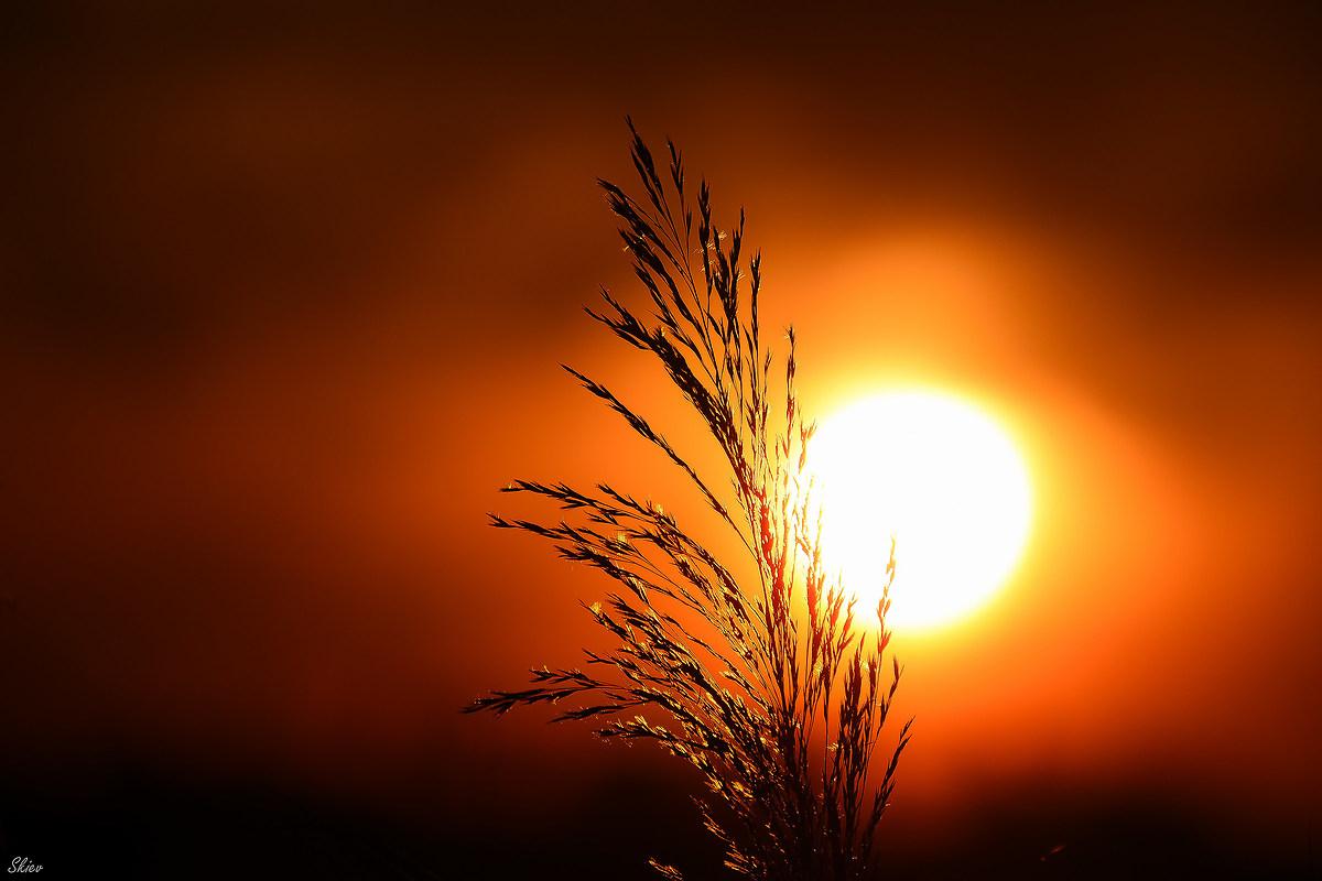 Brother Sun ......