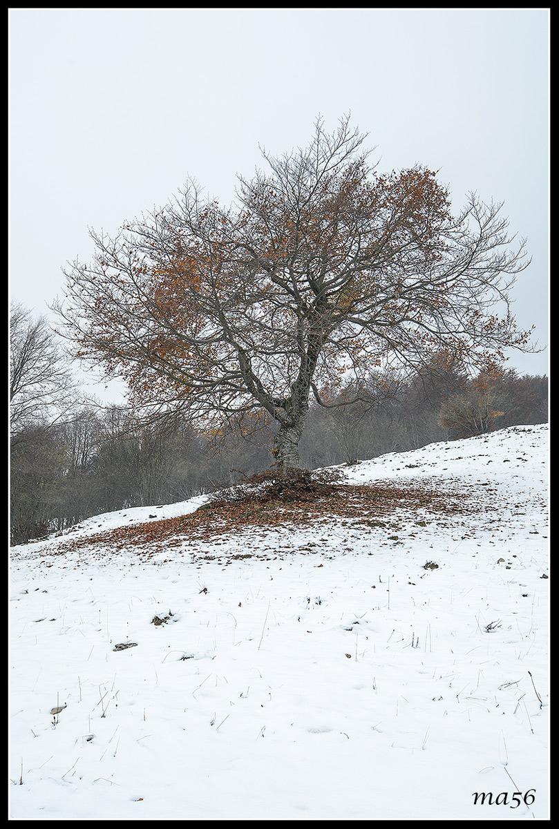 first snow on Mount Baldo (vr)...
