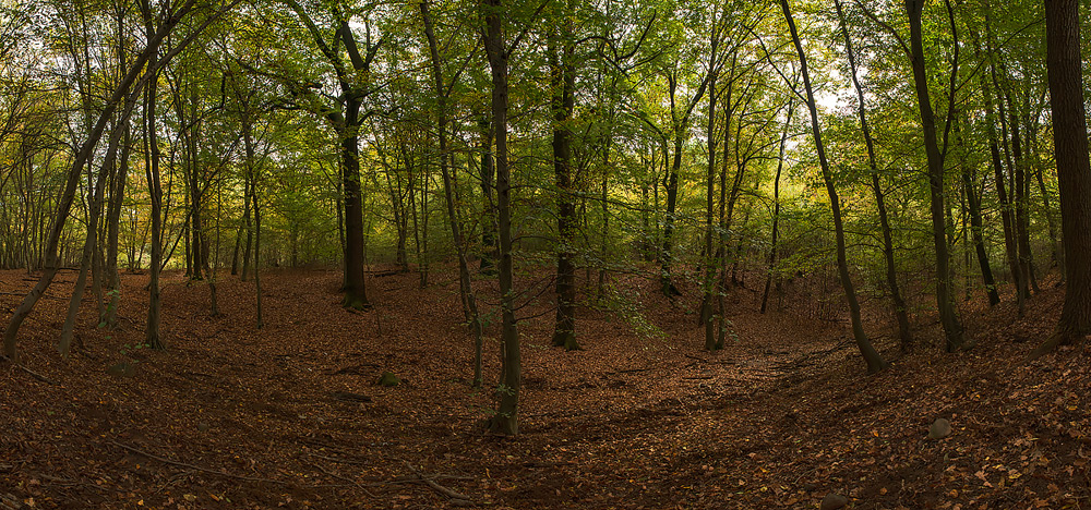 Nel bosco...