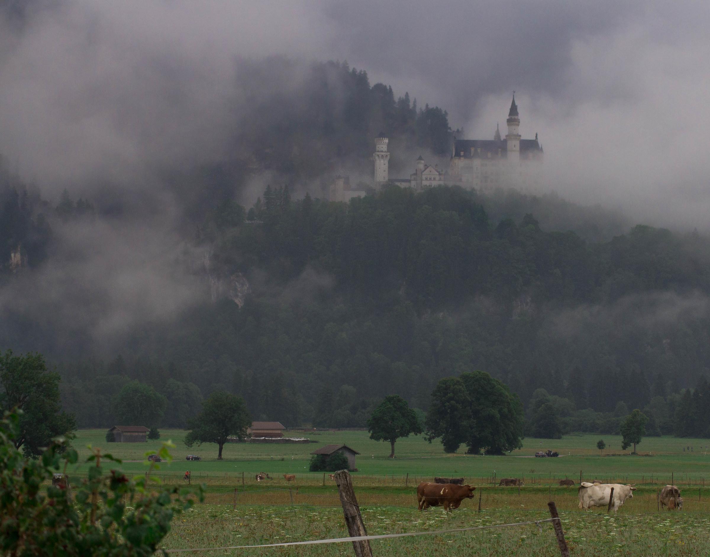 Mucche e castello delle fiabe...
