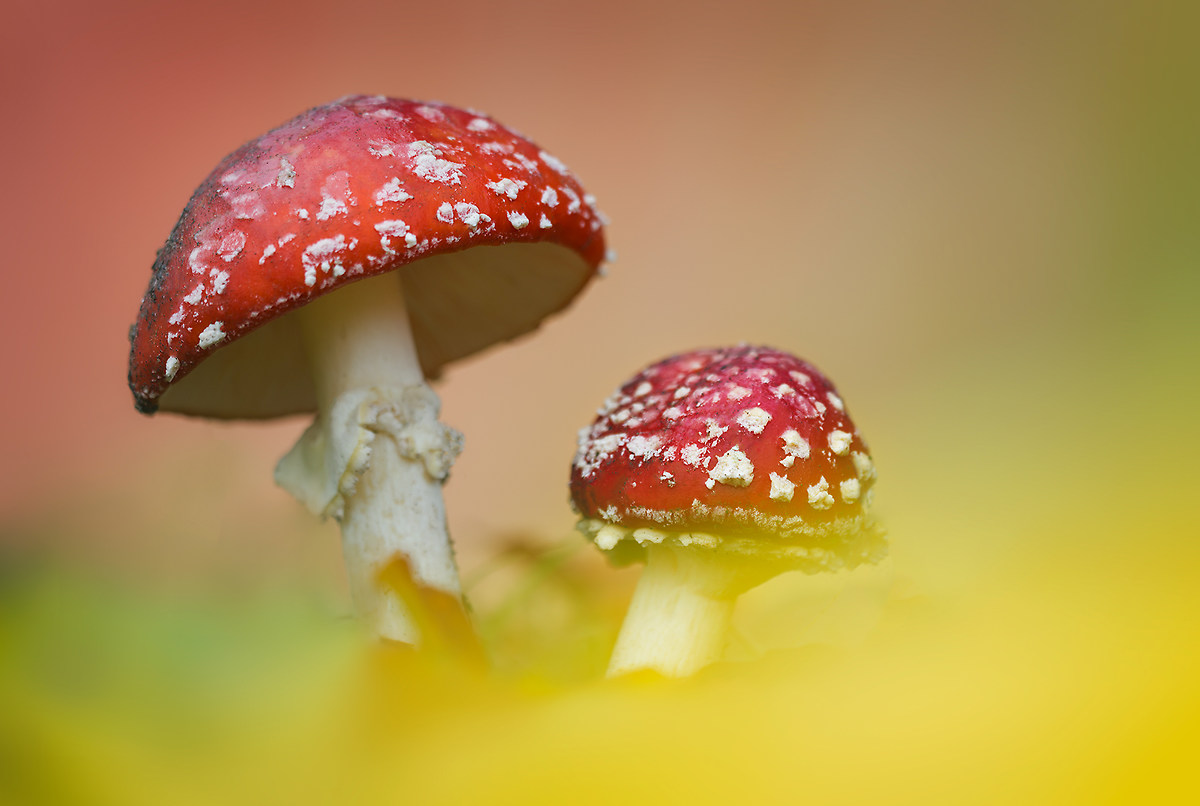 Two mushrooms crafty...