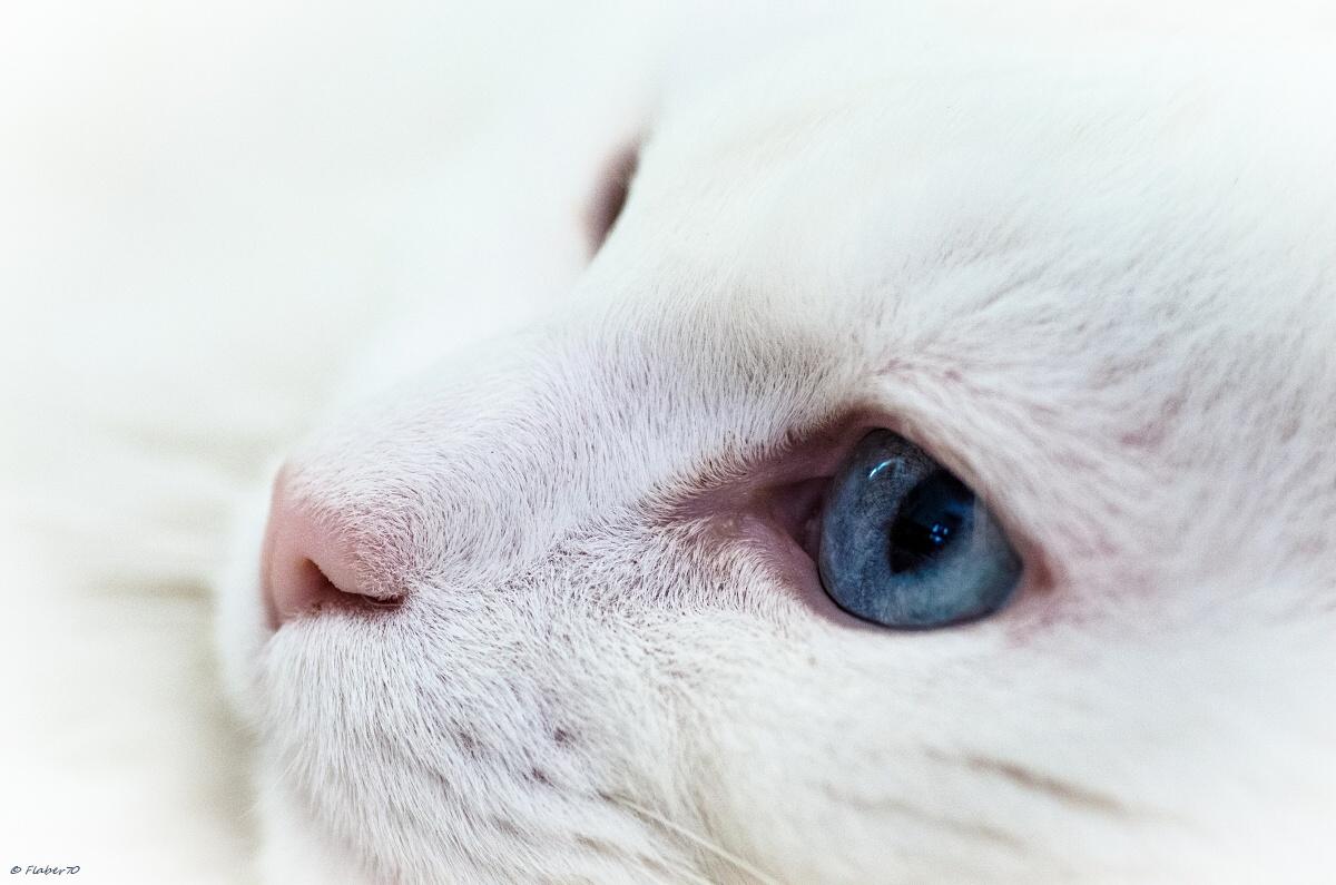 full frame di bianco pelo!!...
