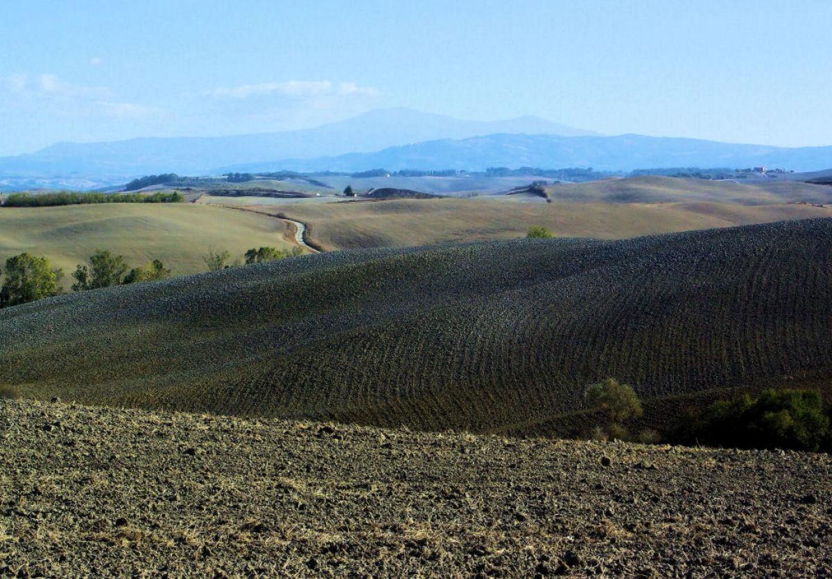 Sienese hills...