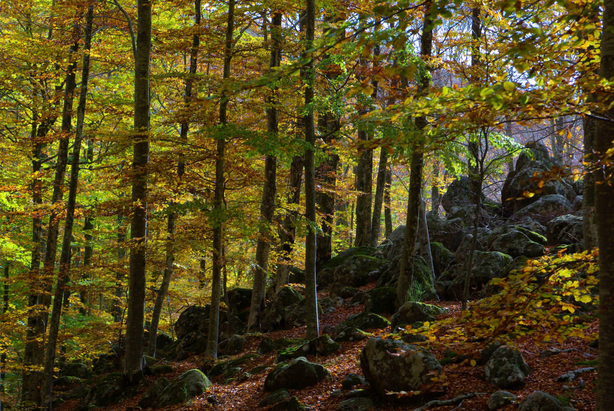 October, the colors of the Monte Amiata...