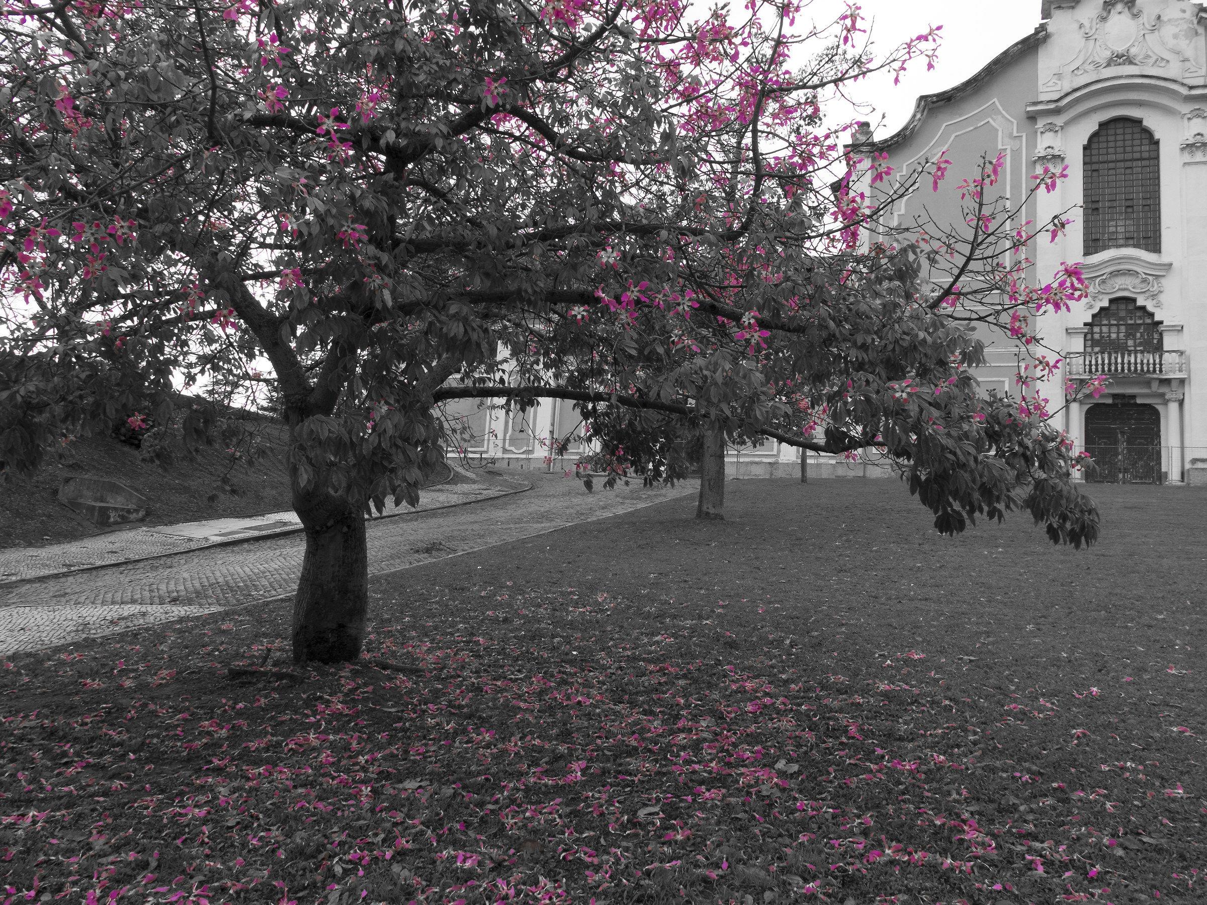 Tree magenta...