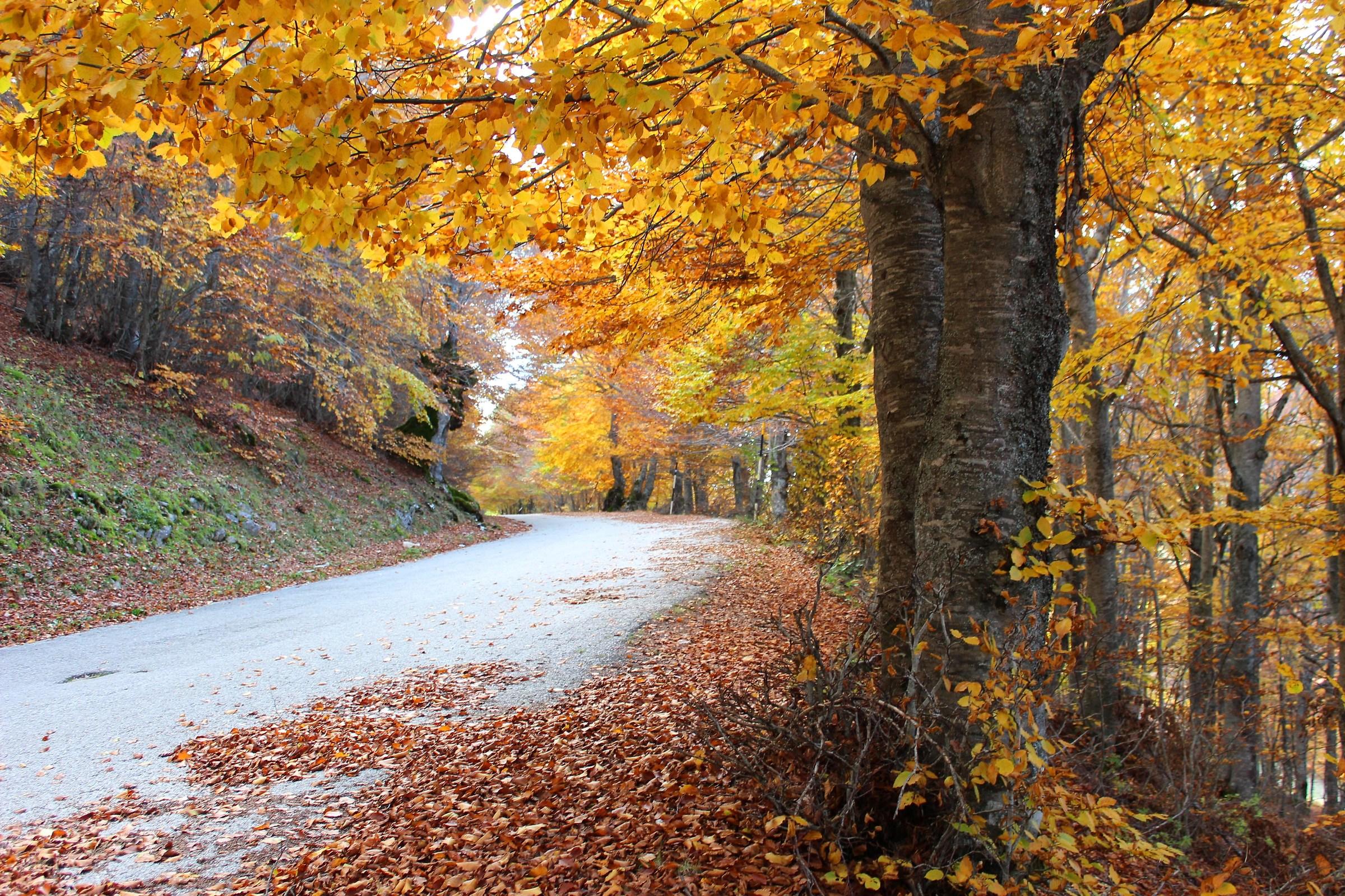 Those autumn 2...