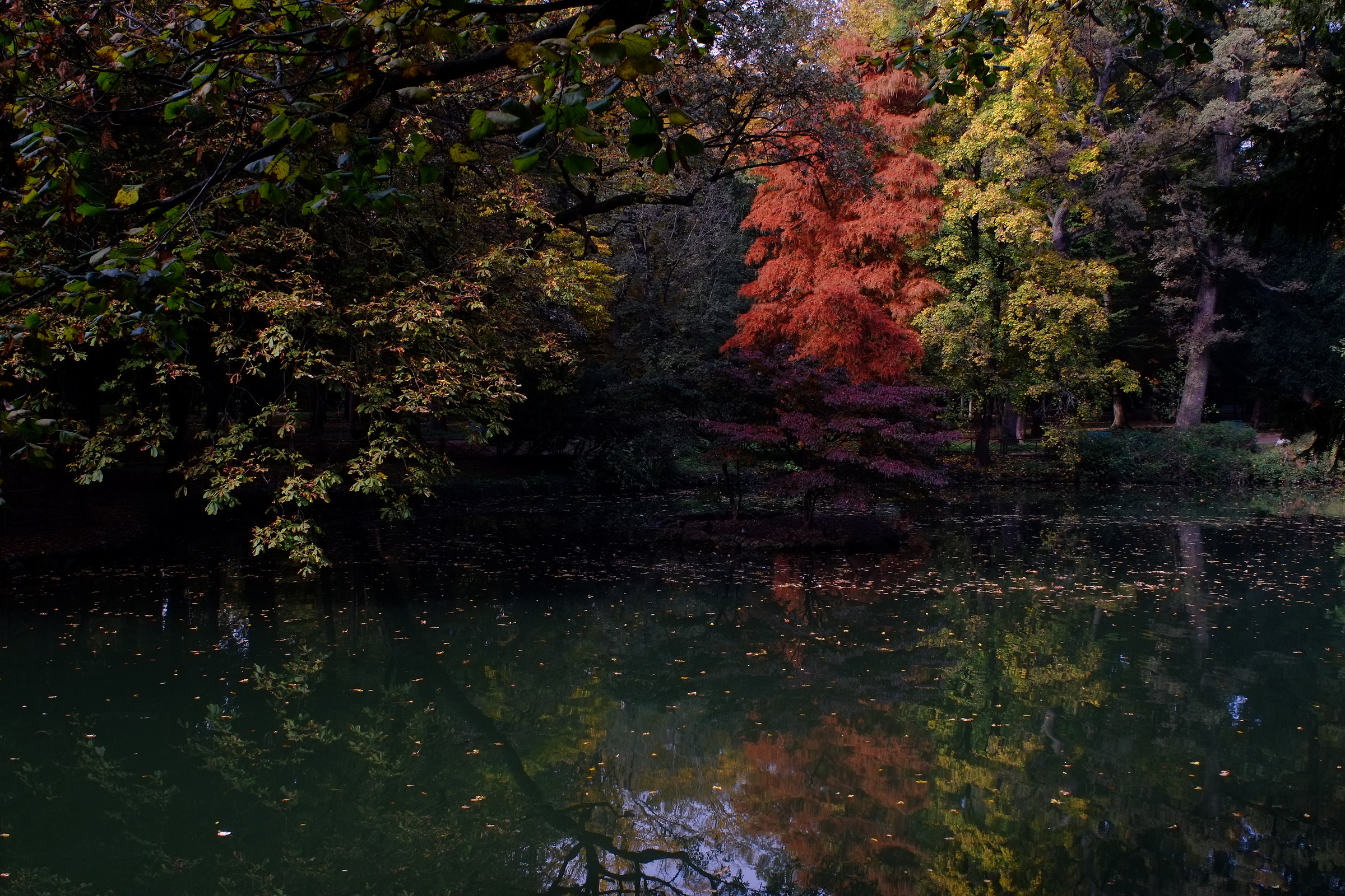 Fall colors at the Park...