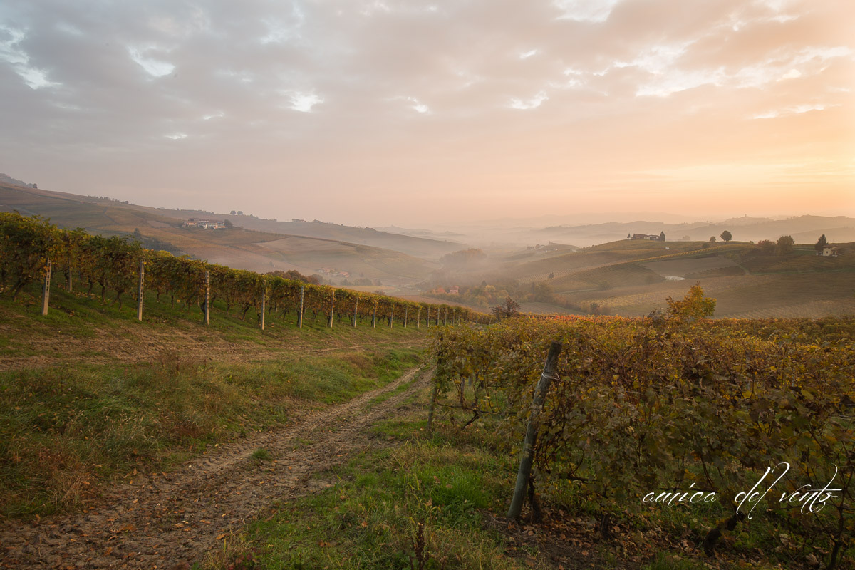 the colors of the Langhe...