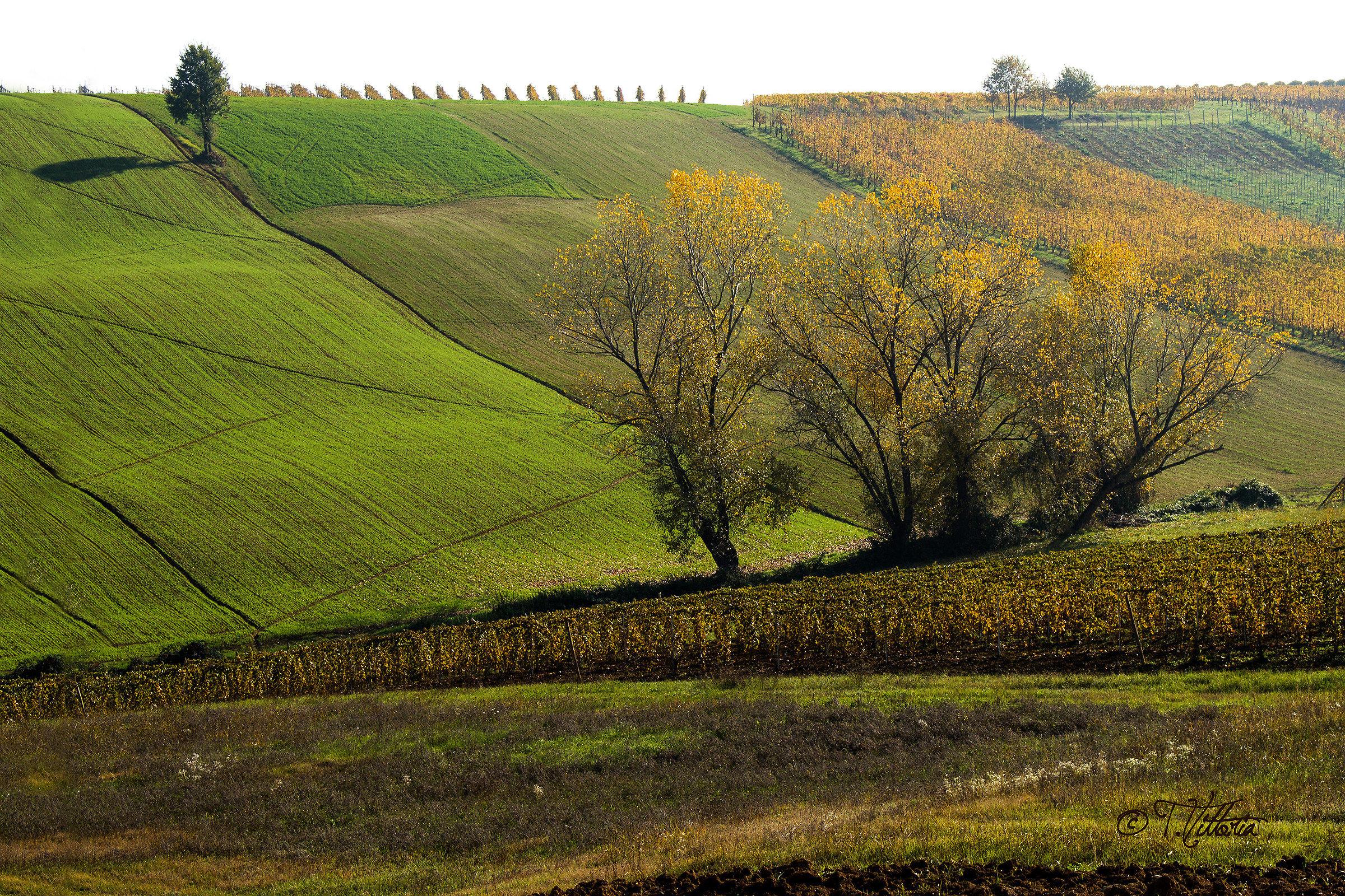 Autumn colors 3...