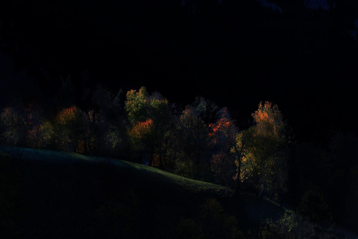 Ultimi raggi di luce nel bosco....