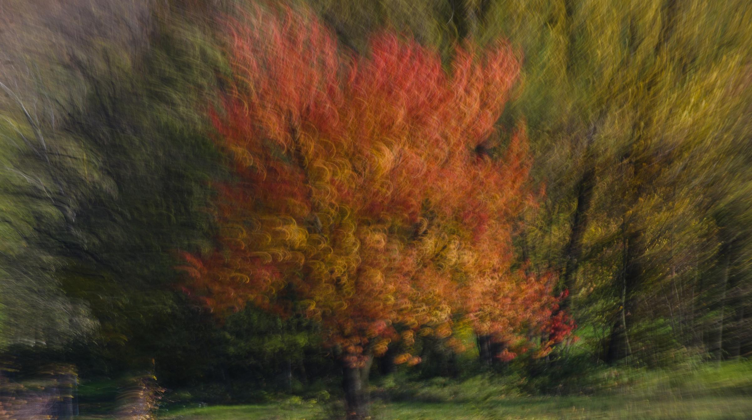 Like a Monet .........