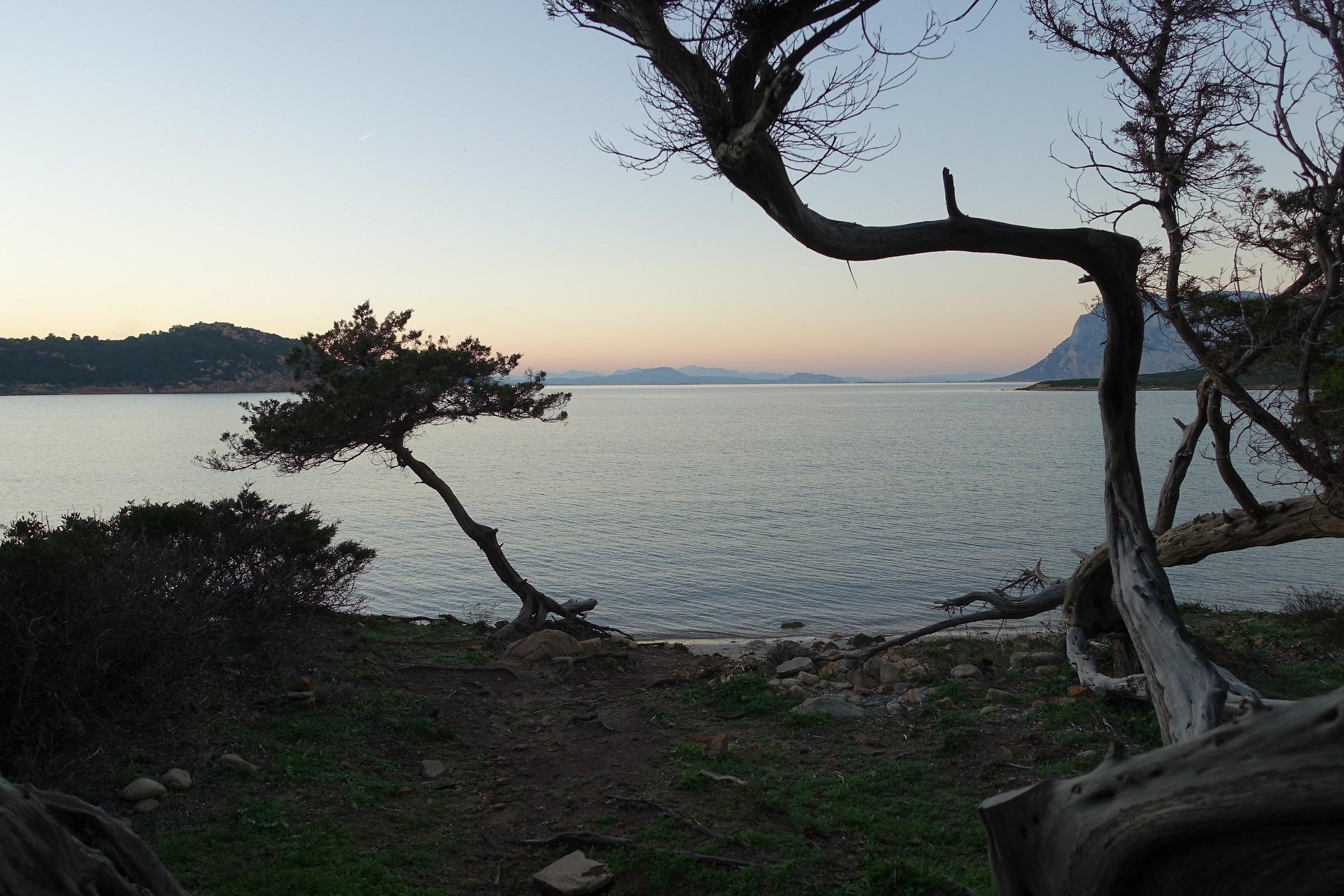 tramonto fra i ginepri di Coda Cavallo...