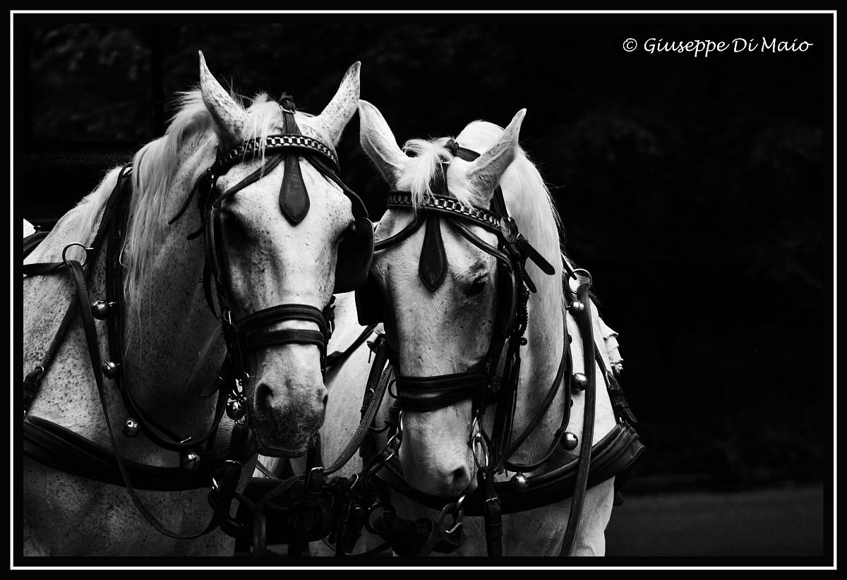 Due simpatici amici...