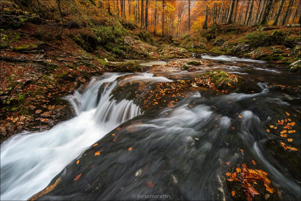 The last Autumn...