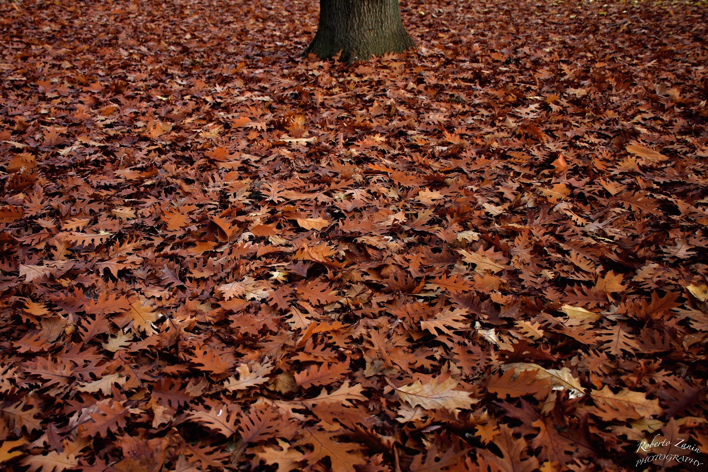 Menù: tronco dalbero su un letto di foglie autun juzaphoto