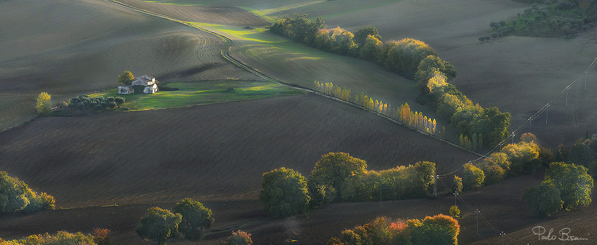 Tree Lines...