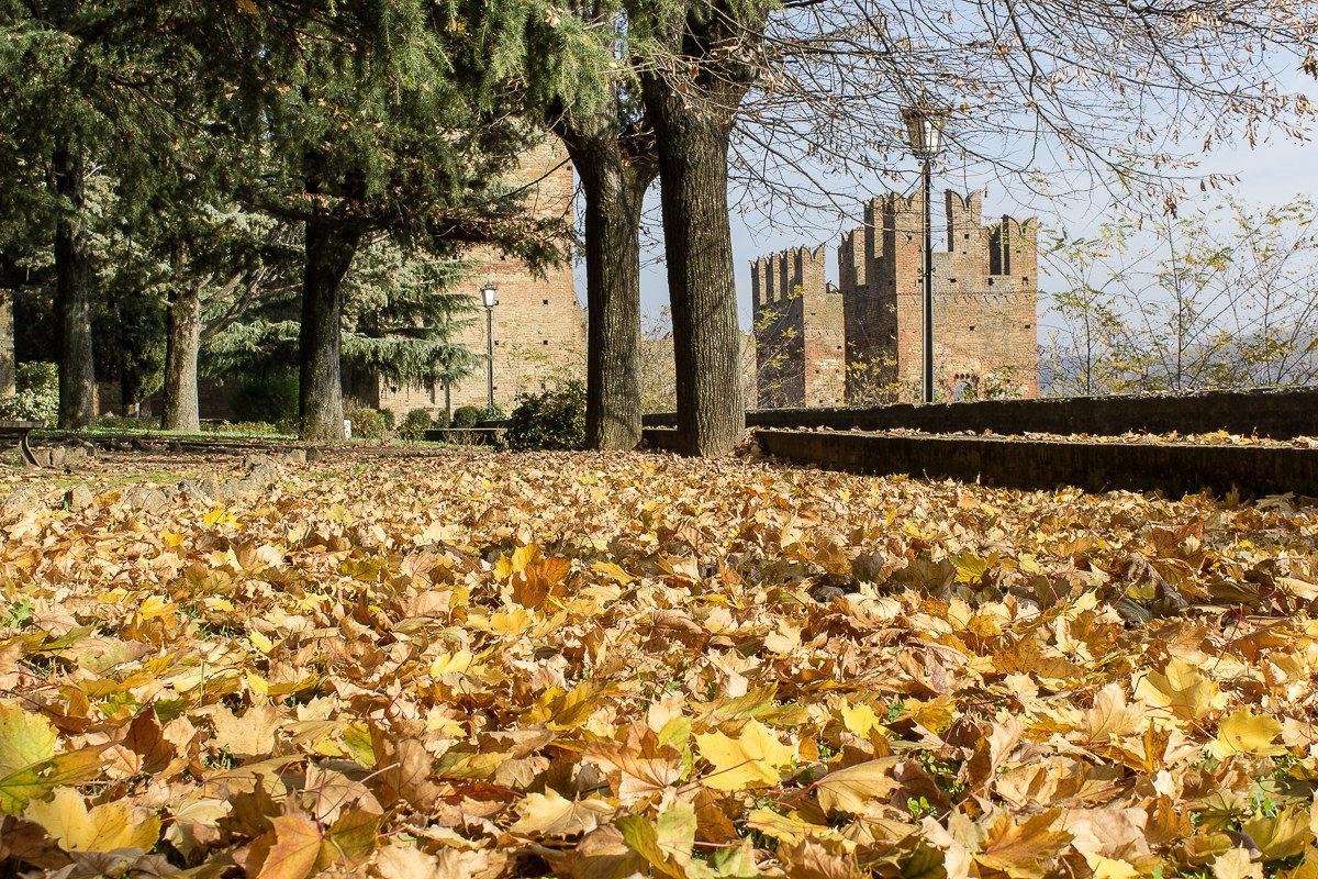 Carpet of leaves...