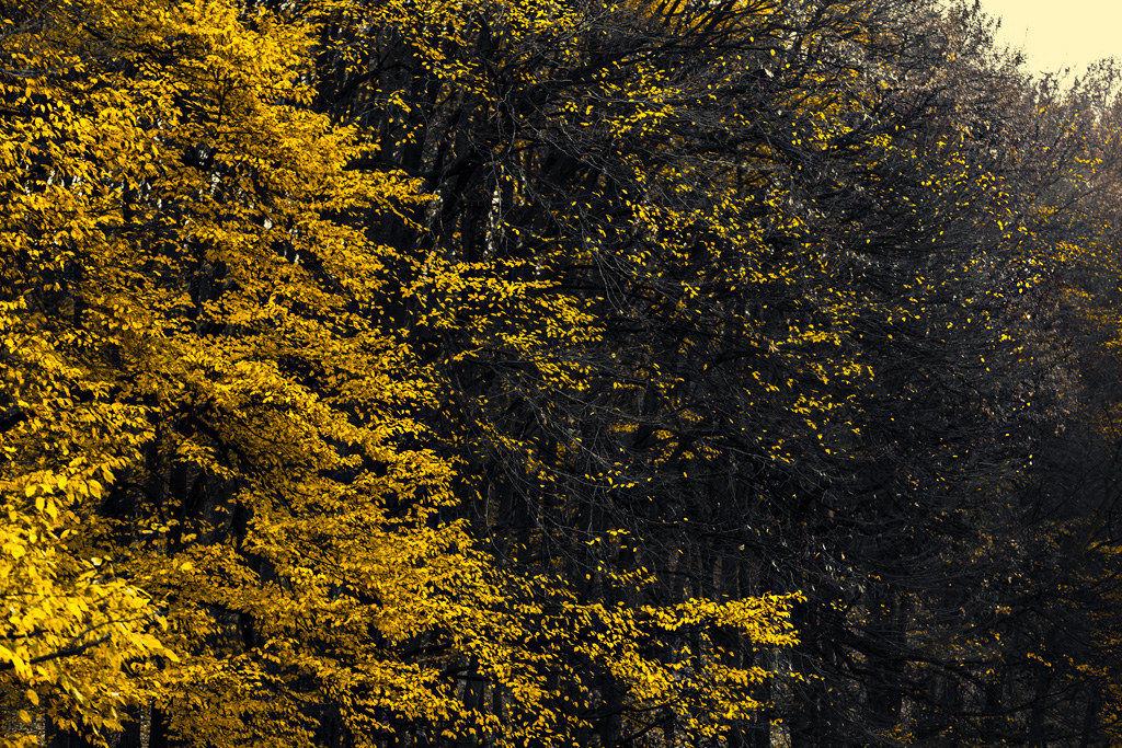 Autumn falling...