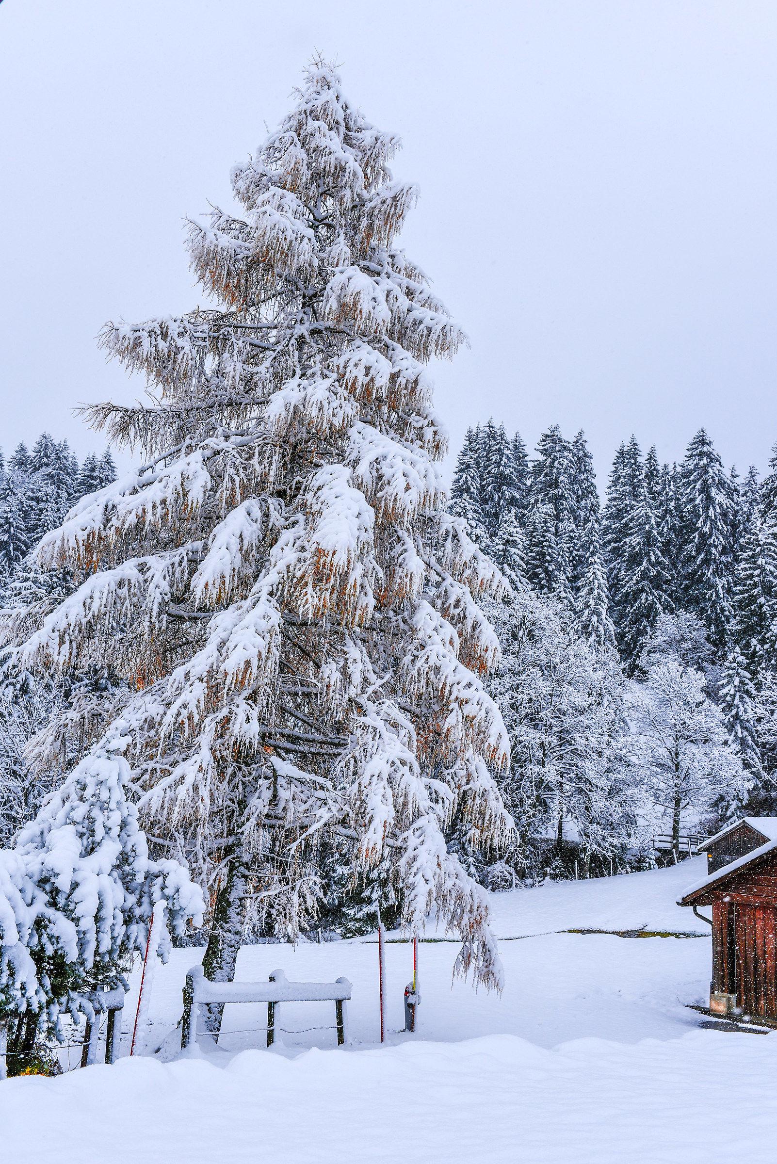 First snow in Wildhaus...