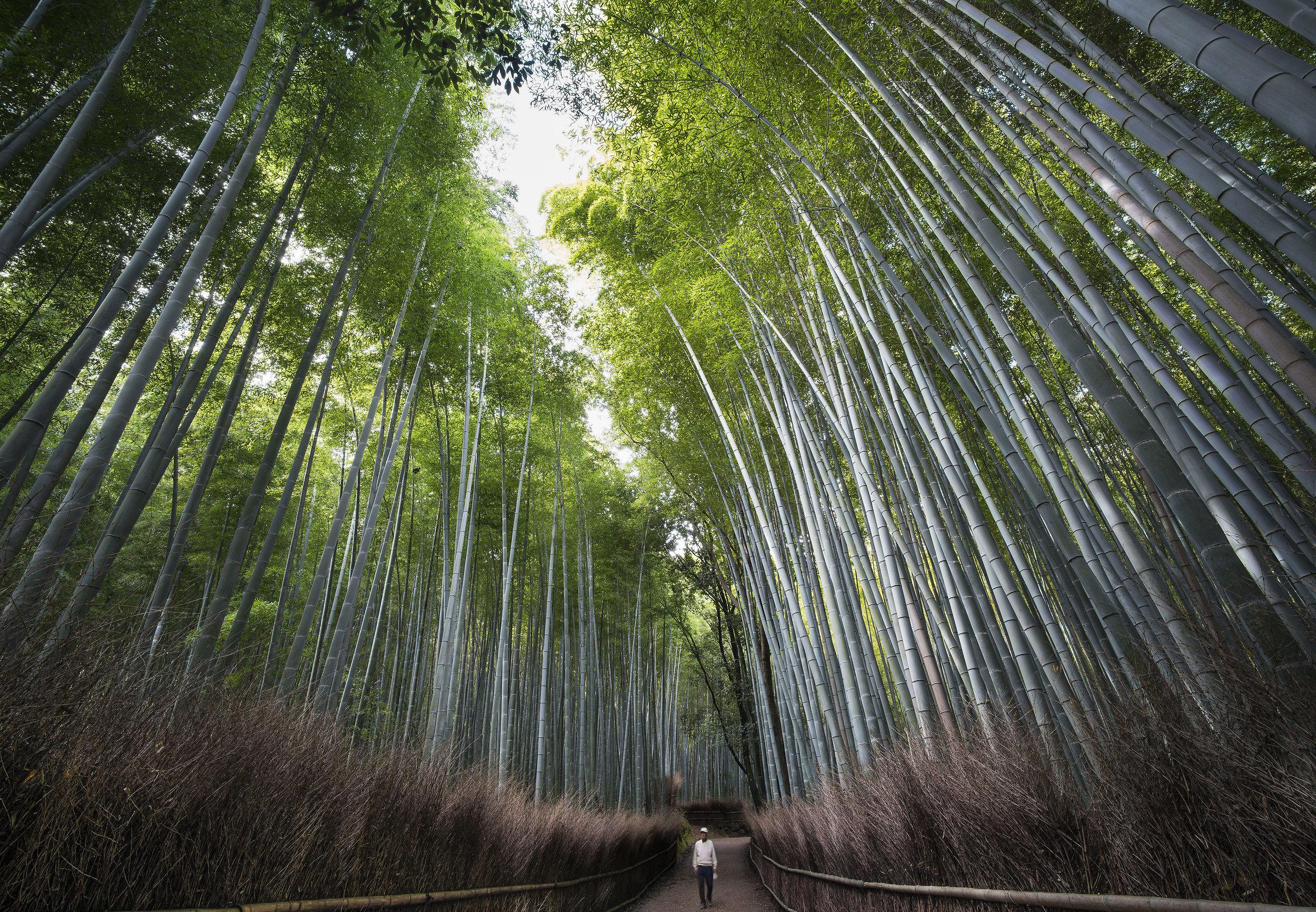 Bamboo Forest Arashiyama...