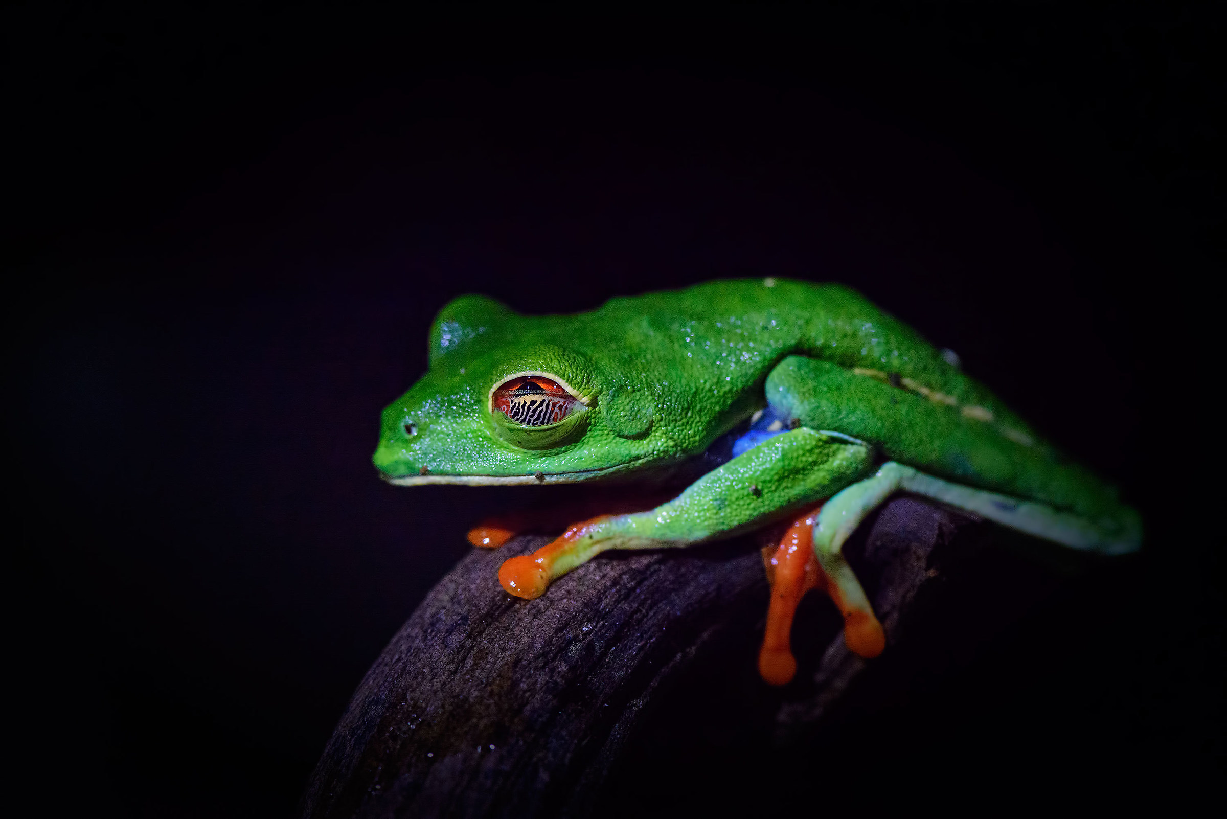 Treefrog...