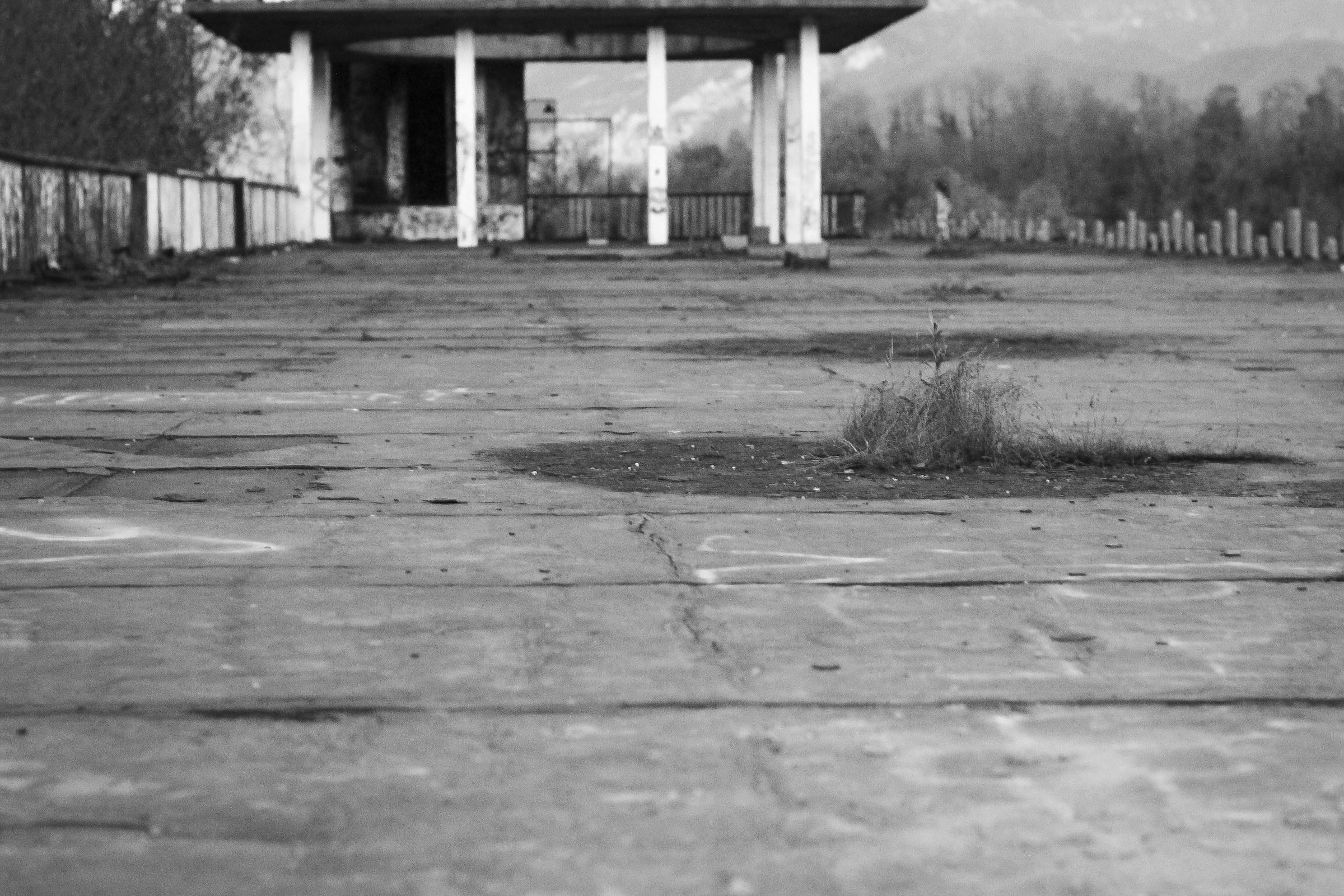 Life in concrete...