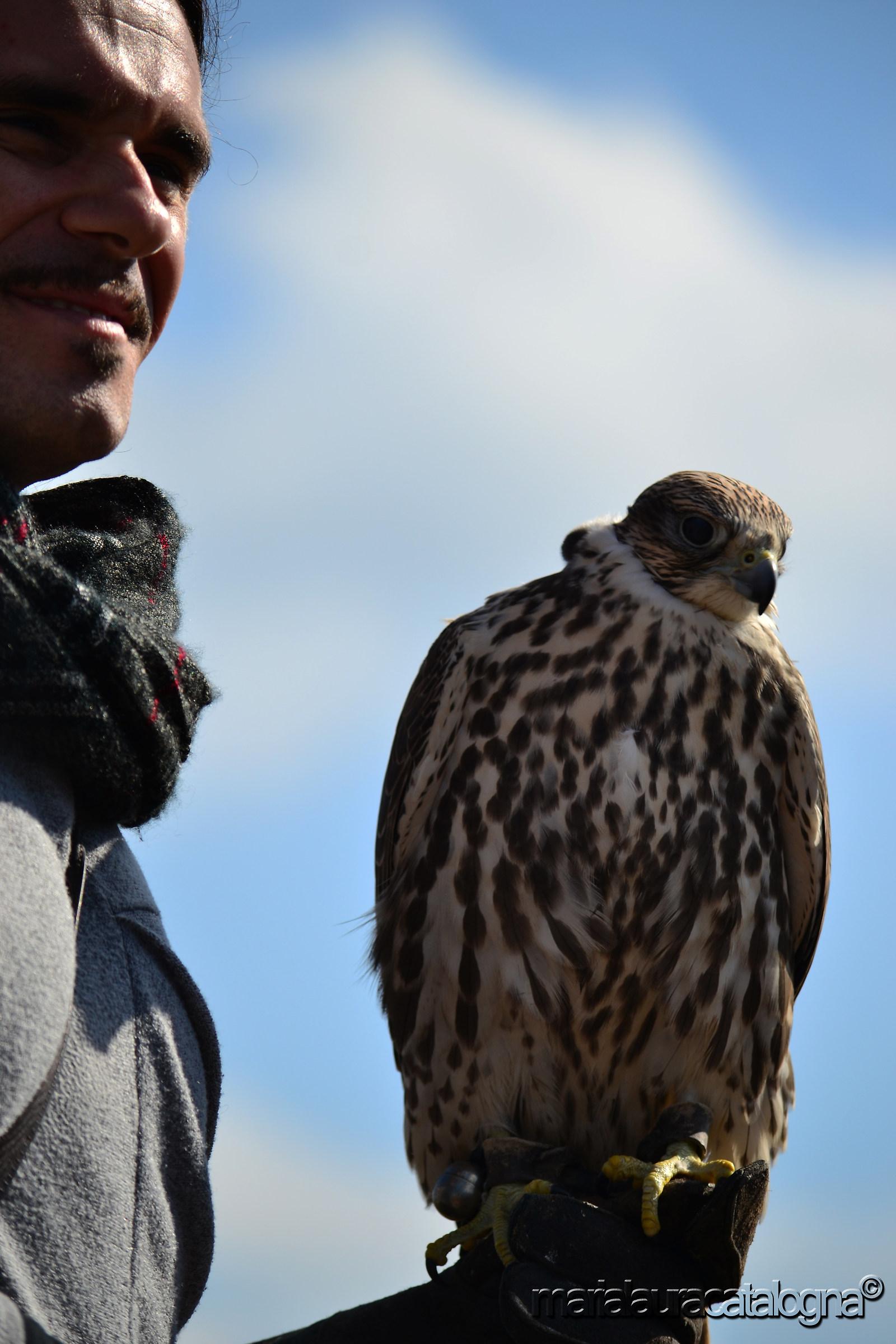 The falconer and the falcon...