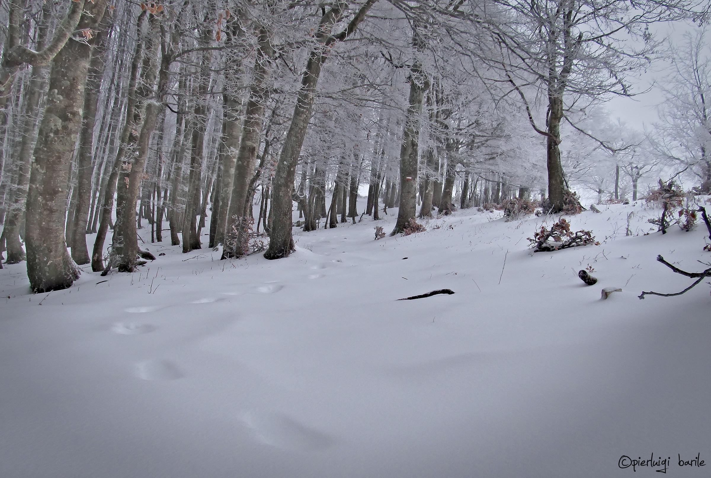 General Winter...