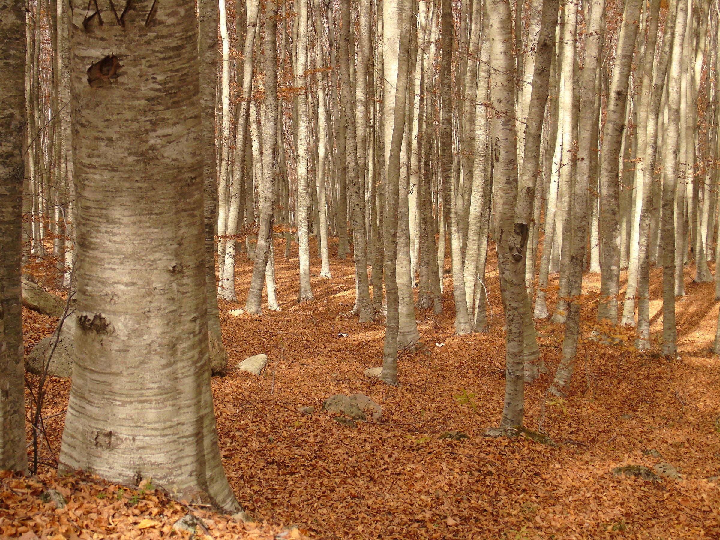 autumn mountain amiata...