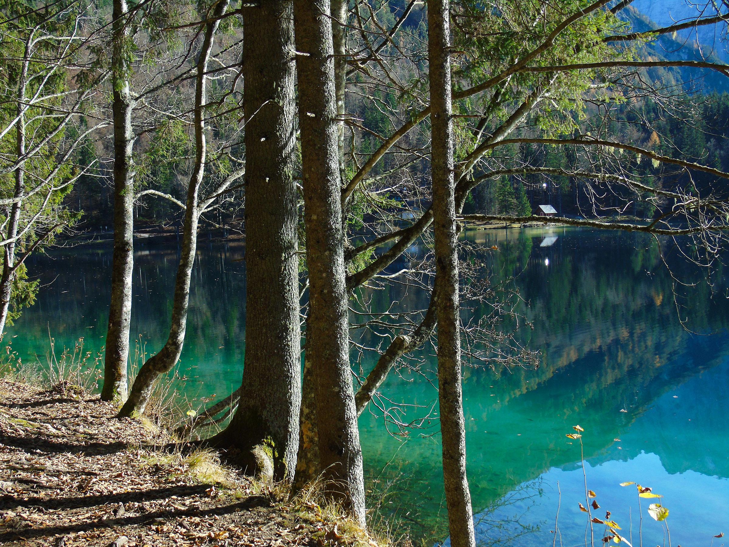 trees lake...