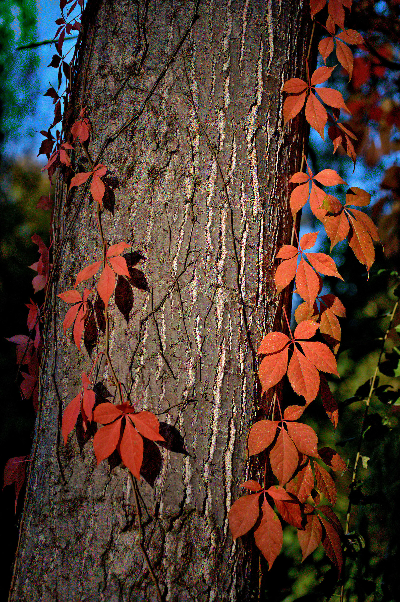 composition of autumn...