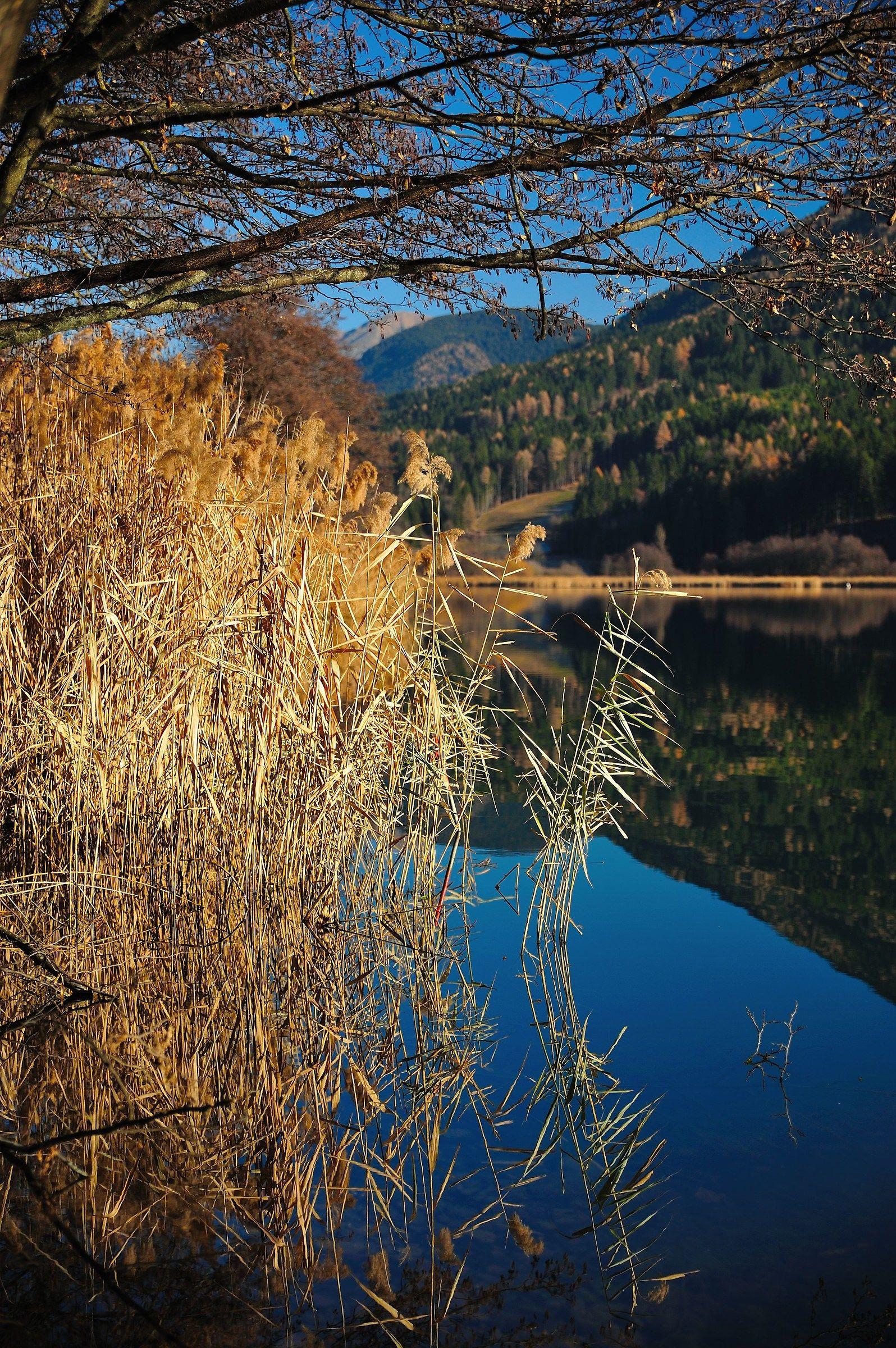 Plateau Pine (Trento)...