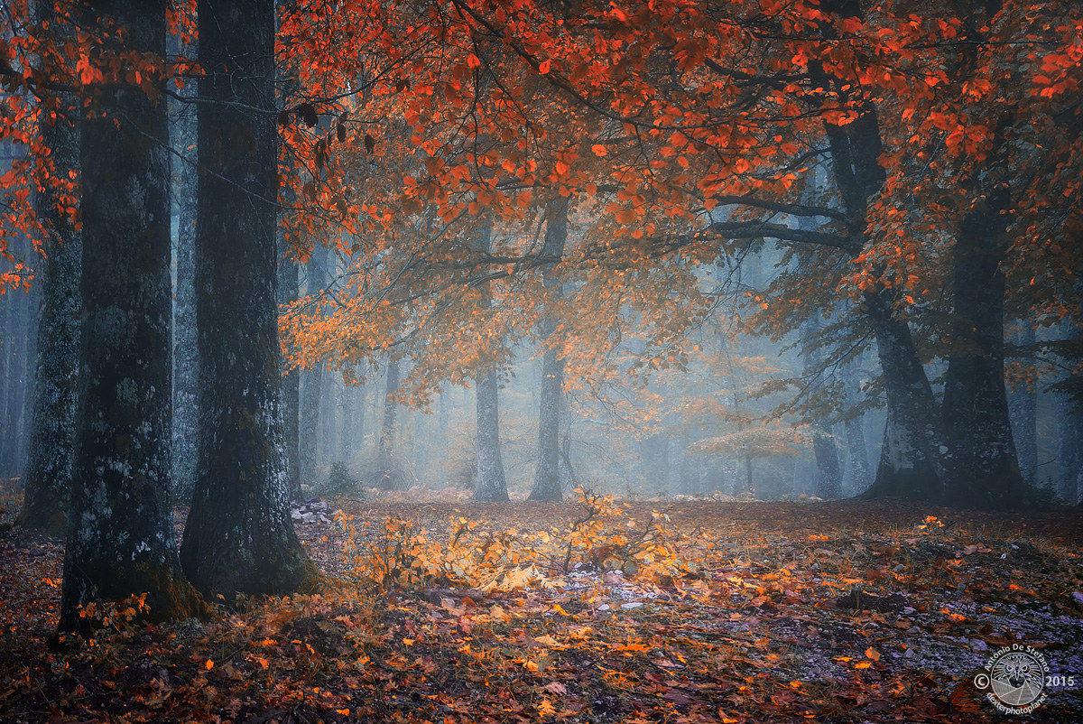 Magic autumn...