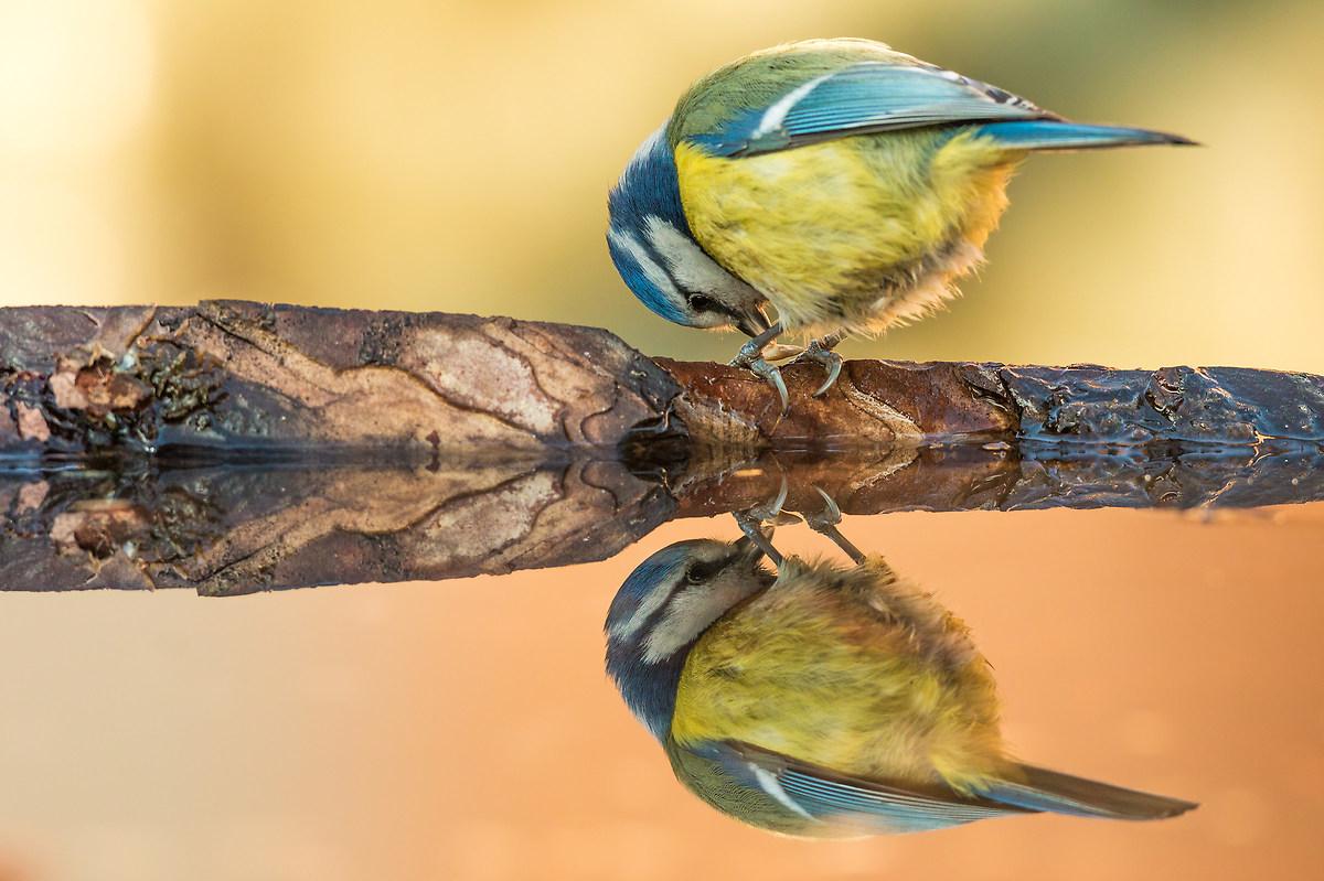 tit mirror...