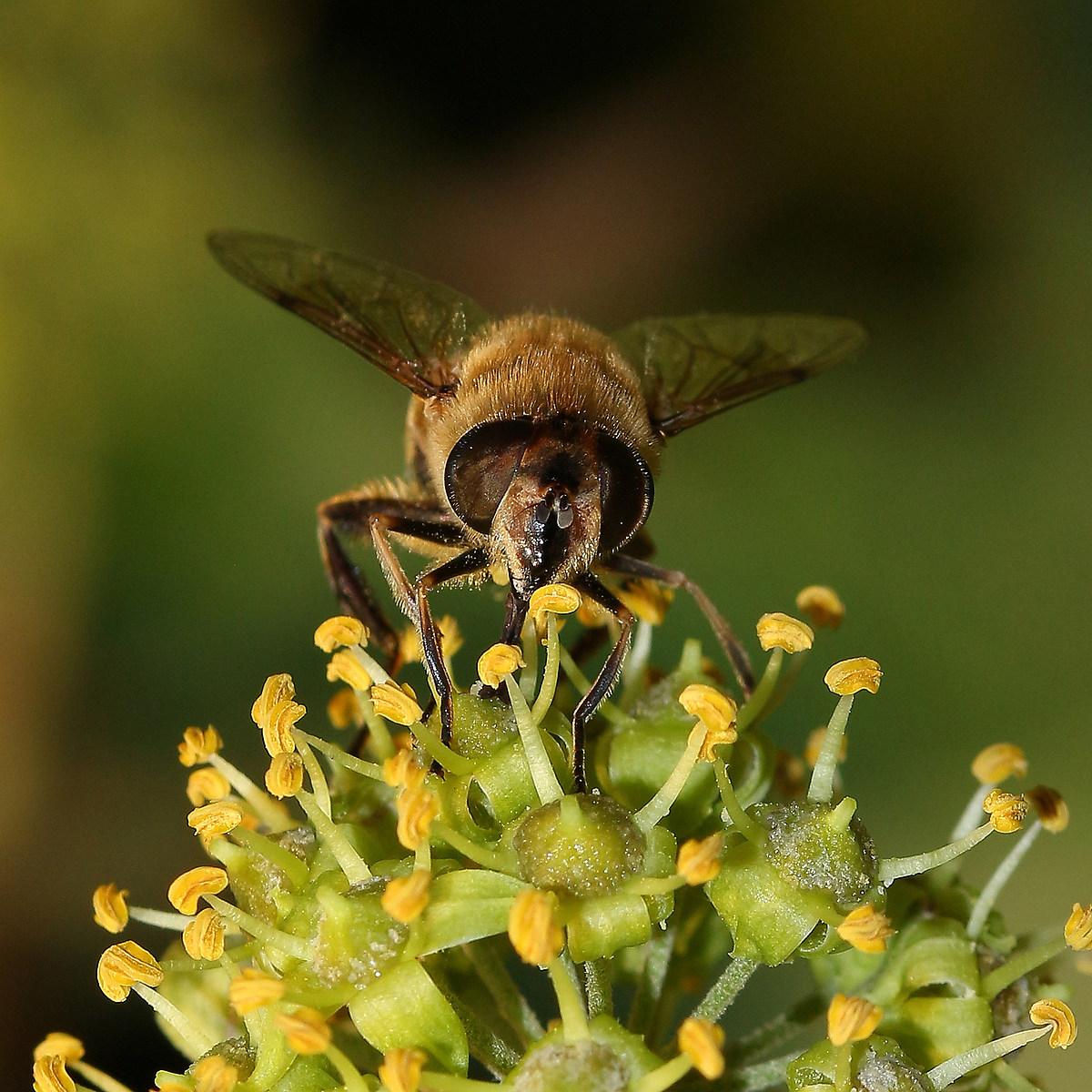 Bee (ii)...
