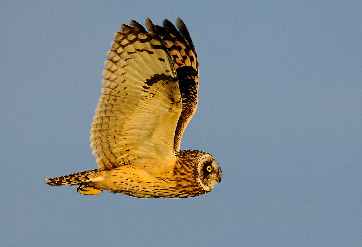 Owl Swamp...