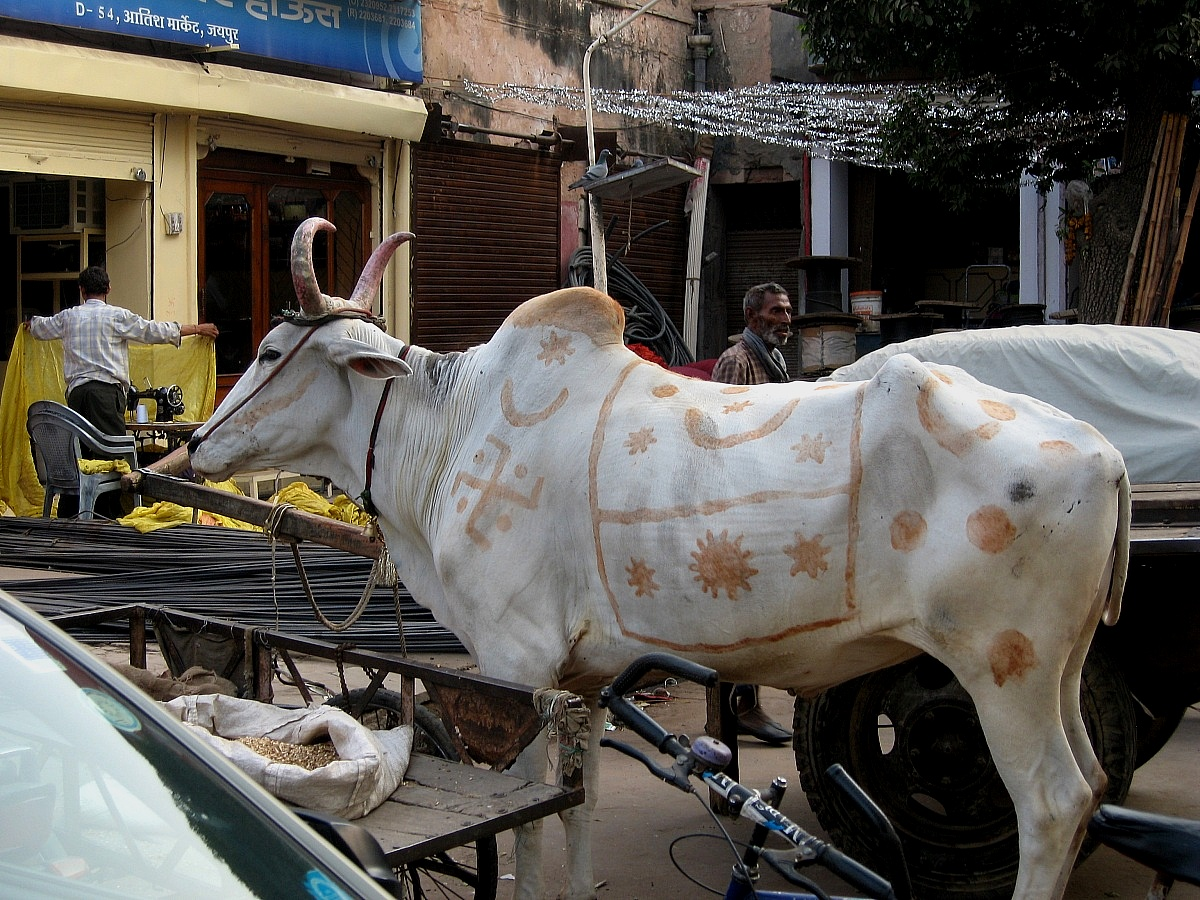 Puschkar fiera del bestiame...