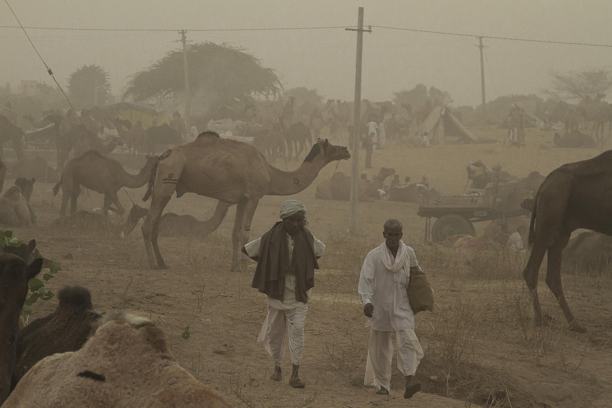 Camel Fair...