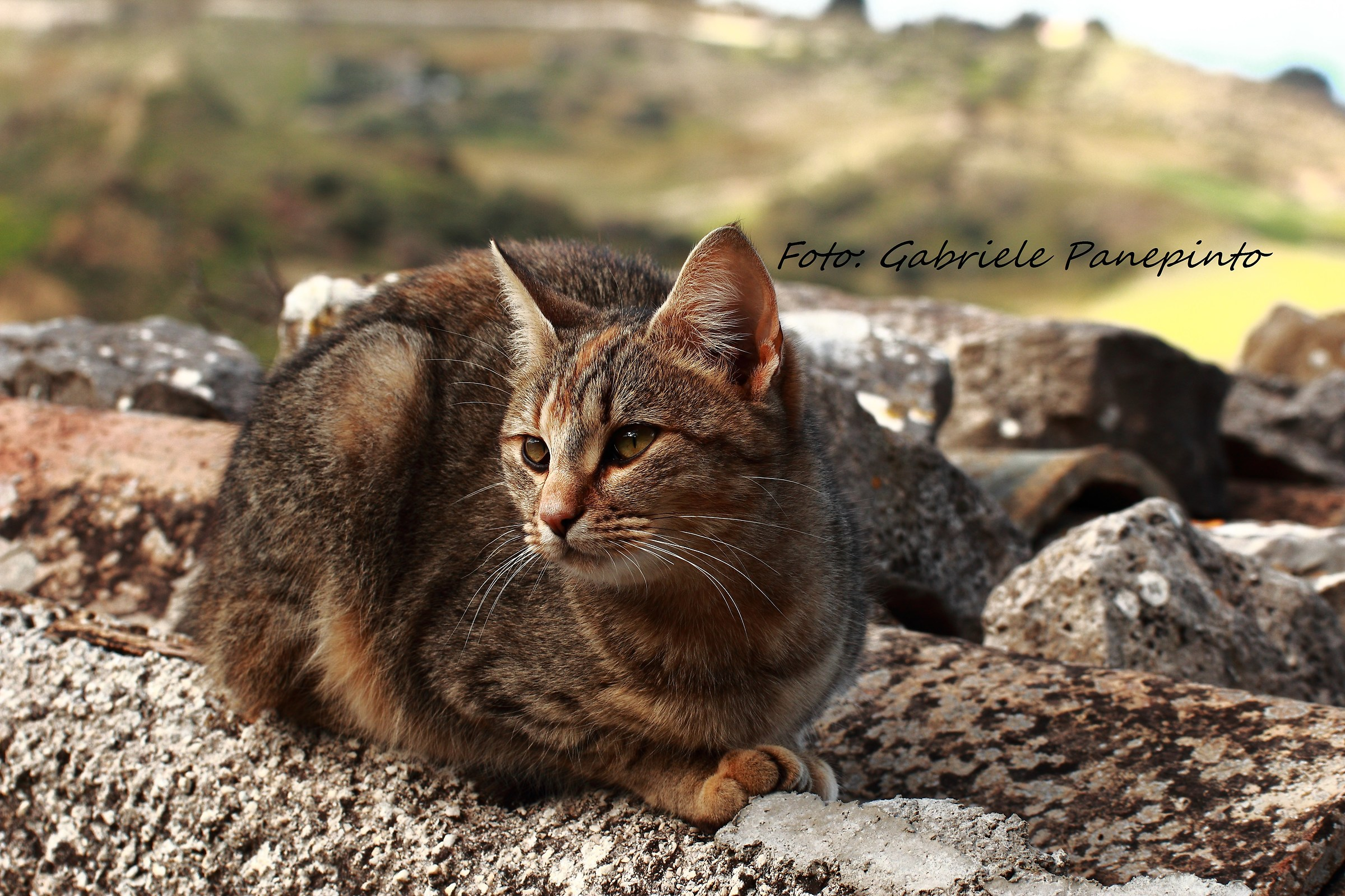 Cat on a roof ... terracotta!...