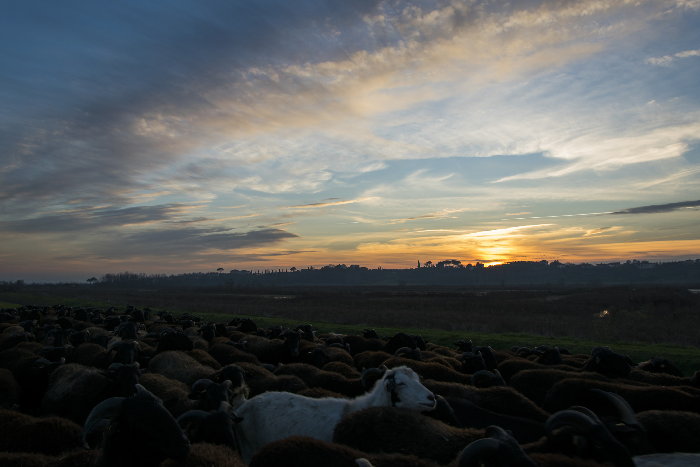 Sunset 5...
